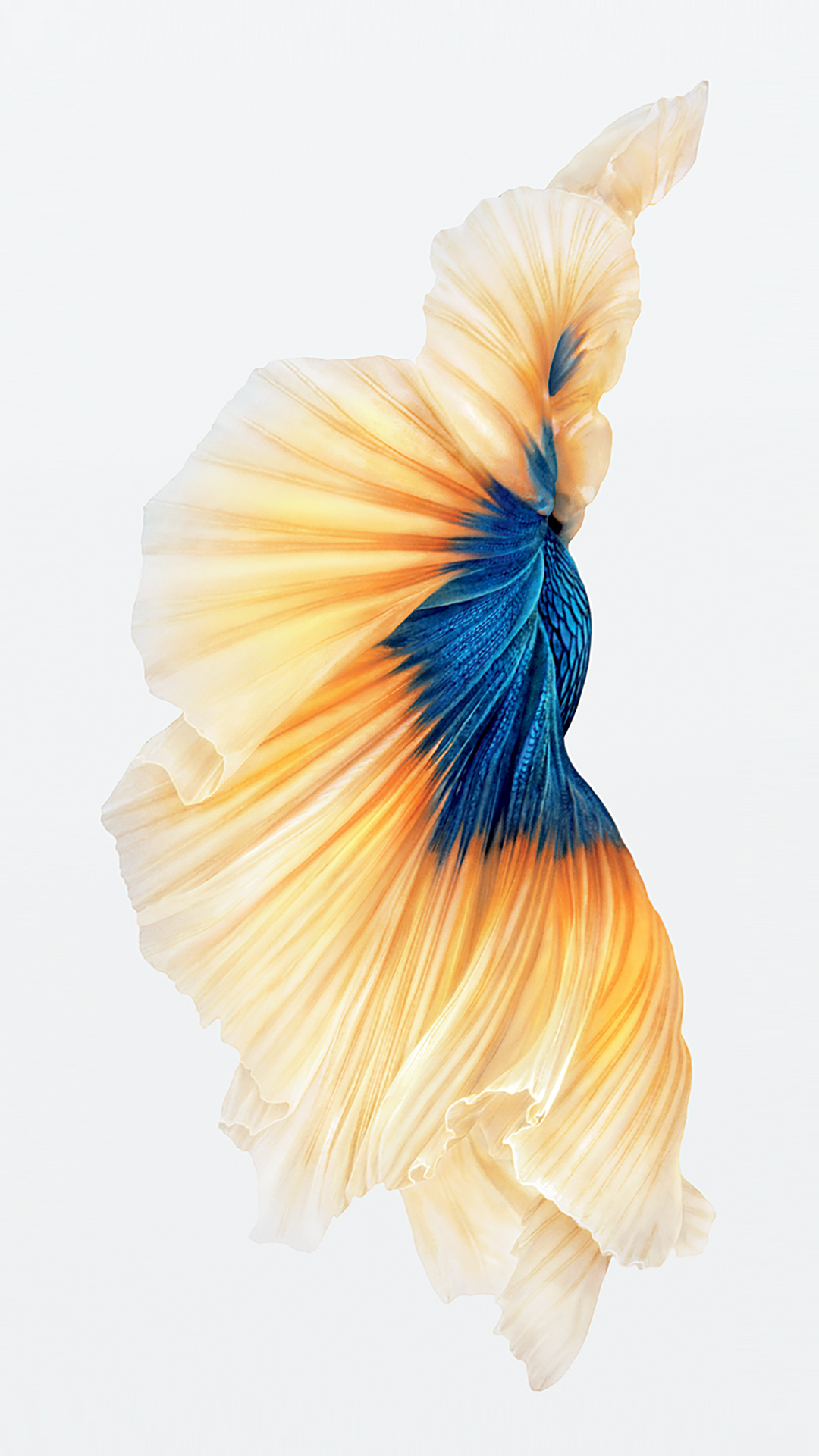 ios 9 fish wallpaper wallpapersafariwallpapers poissons iphone 5s iphone 6 iphone 6 plus ipod 1080x1921