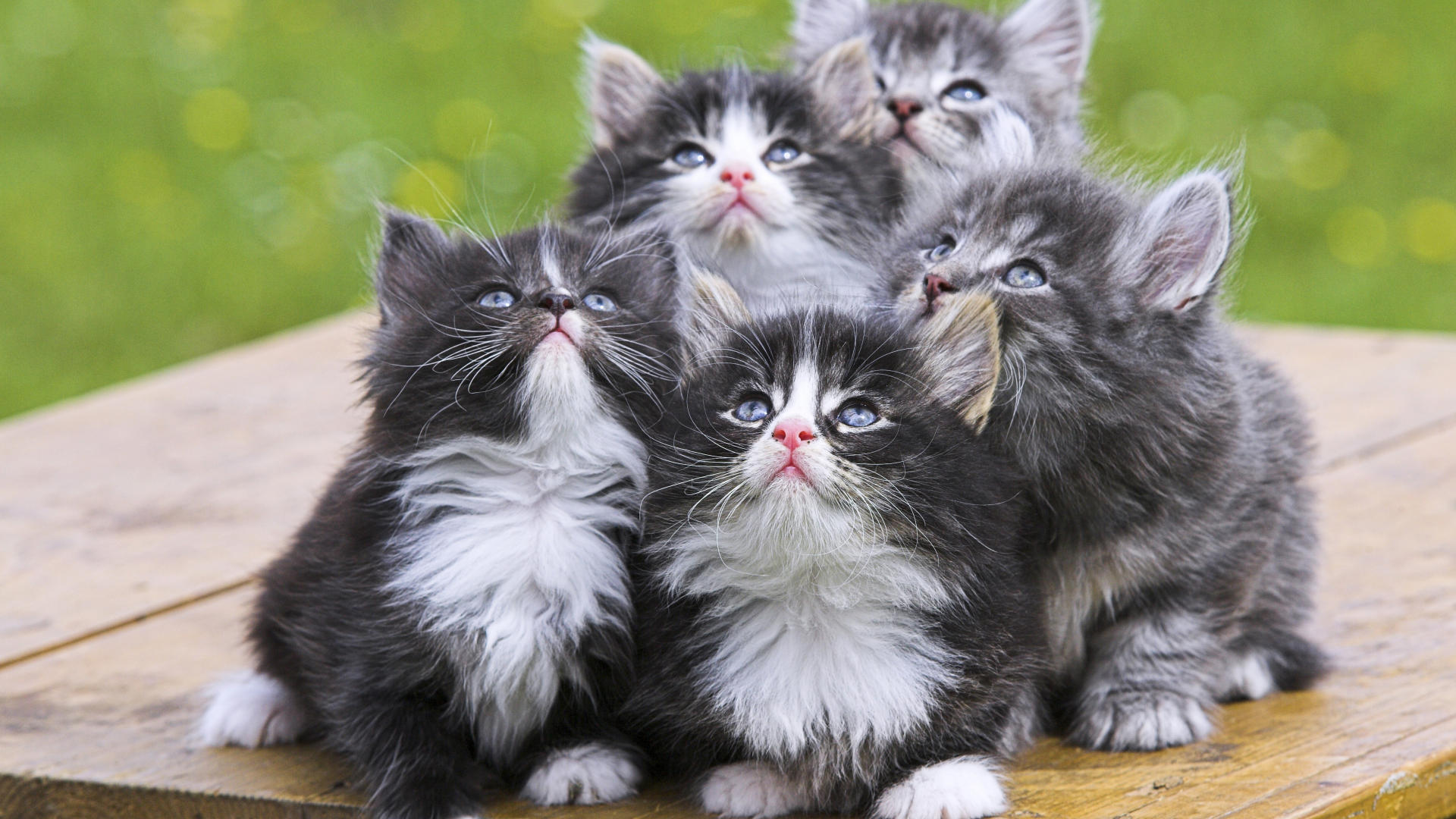 Cute Kittens   Babies Pets and Animals Wallpaper 16731287 1920x1080