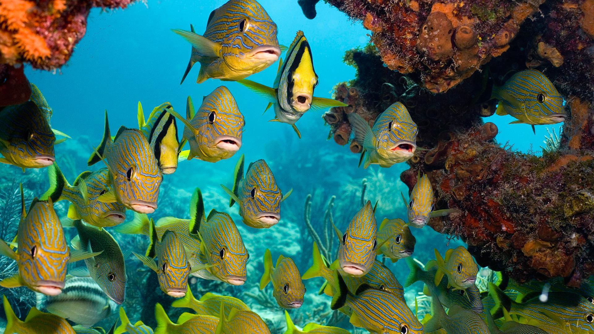School Of Fish Hd Wallpaper Wallpaper List 1920x1080