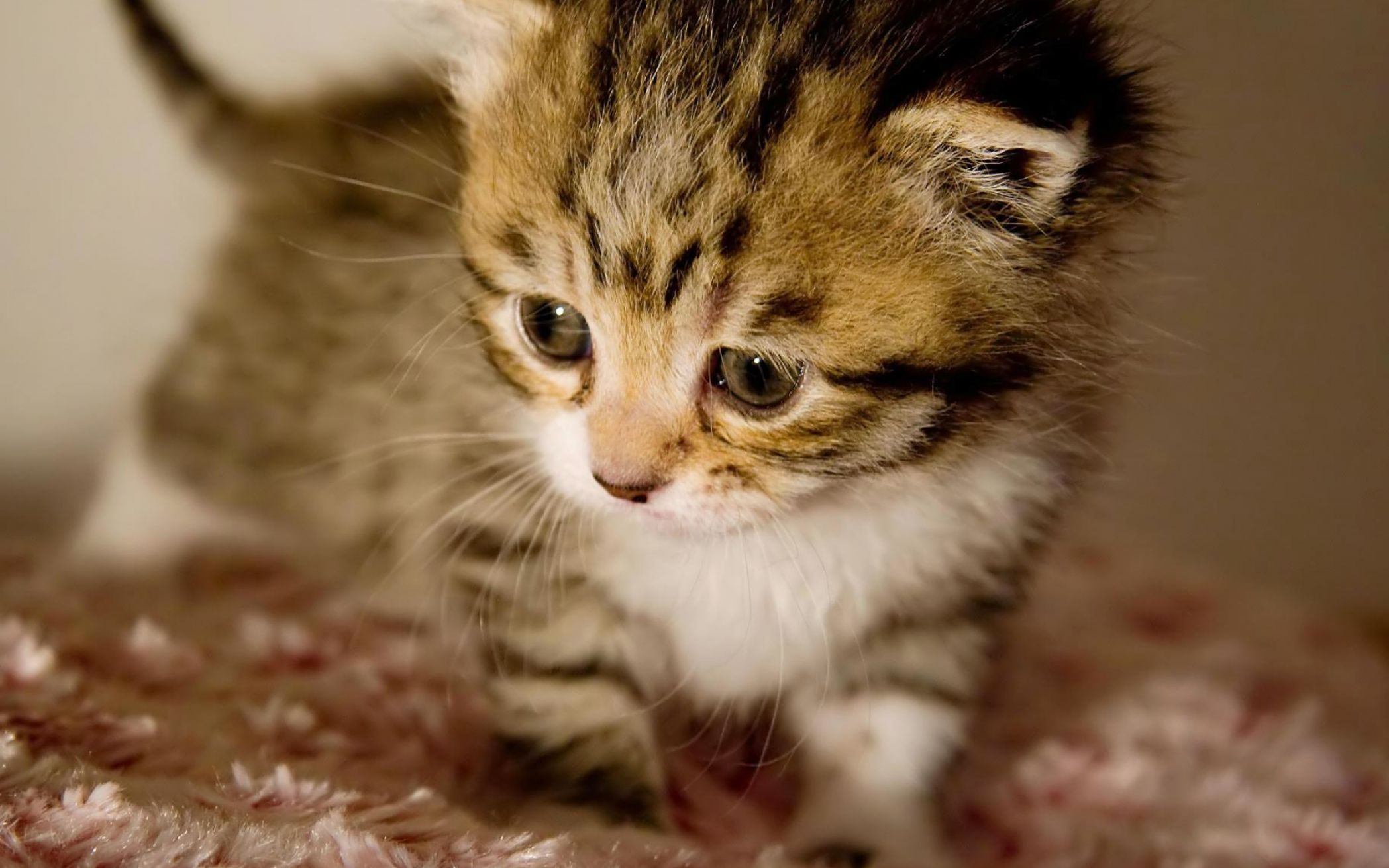 Cute baby kittens wallpapers pictures 2 2097x1311