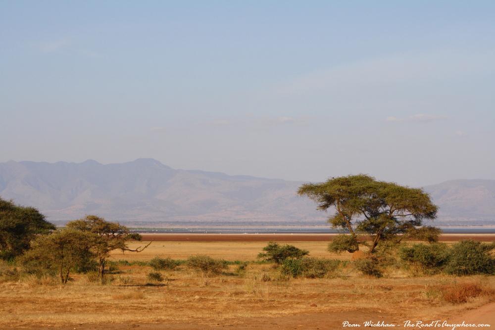 African Grassland Background