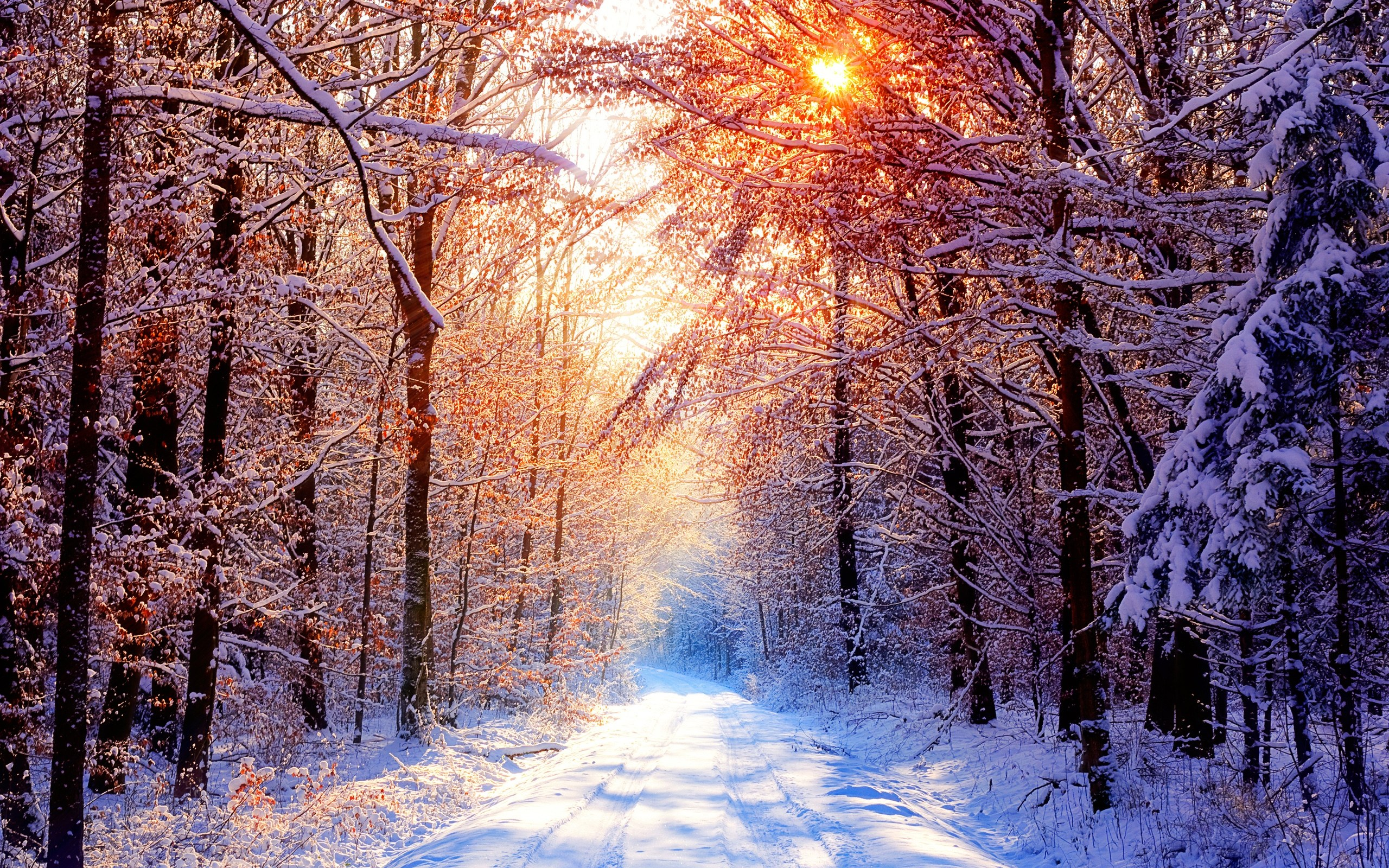 Set in a snowy forest wallpapers and images   wallpapers pictures 2560x1600