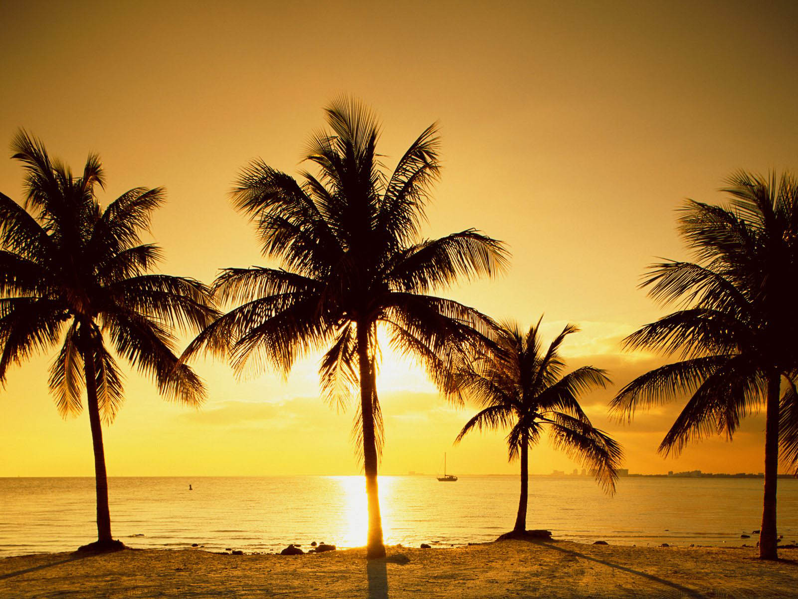 wallpapers Palm Trees Wallpapers 1600x1200