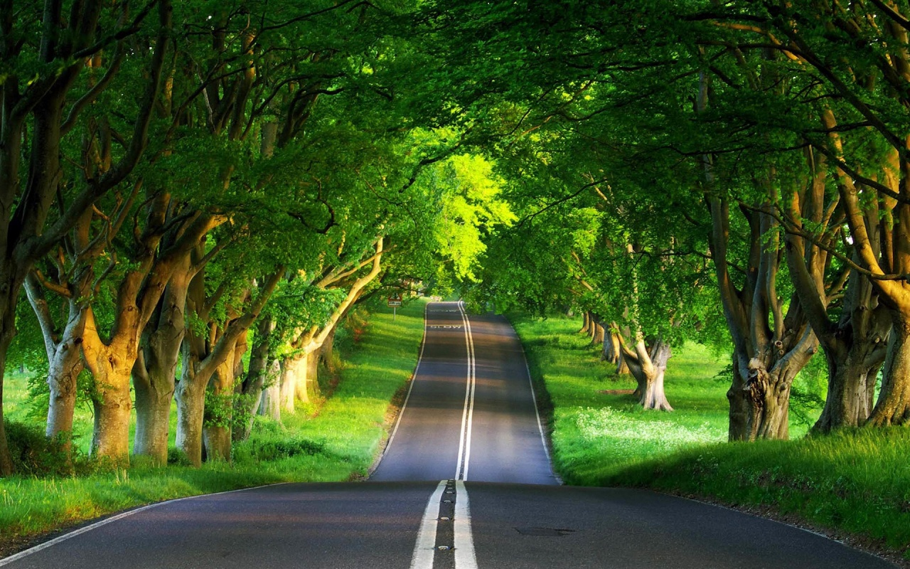 Wallpapers Check out the cool latest Green Nature images High 1280x800