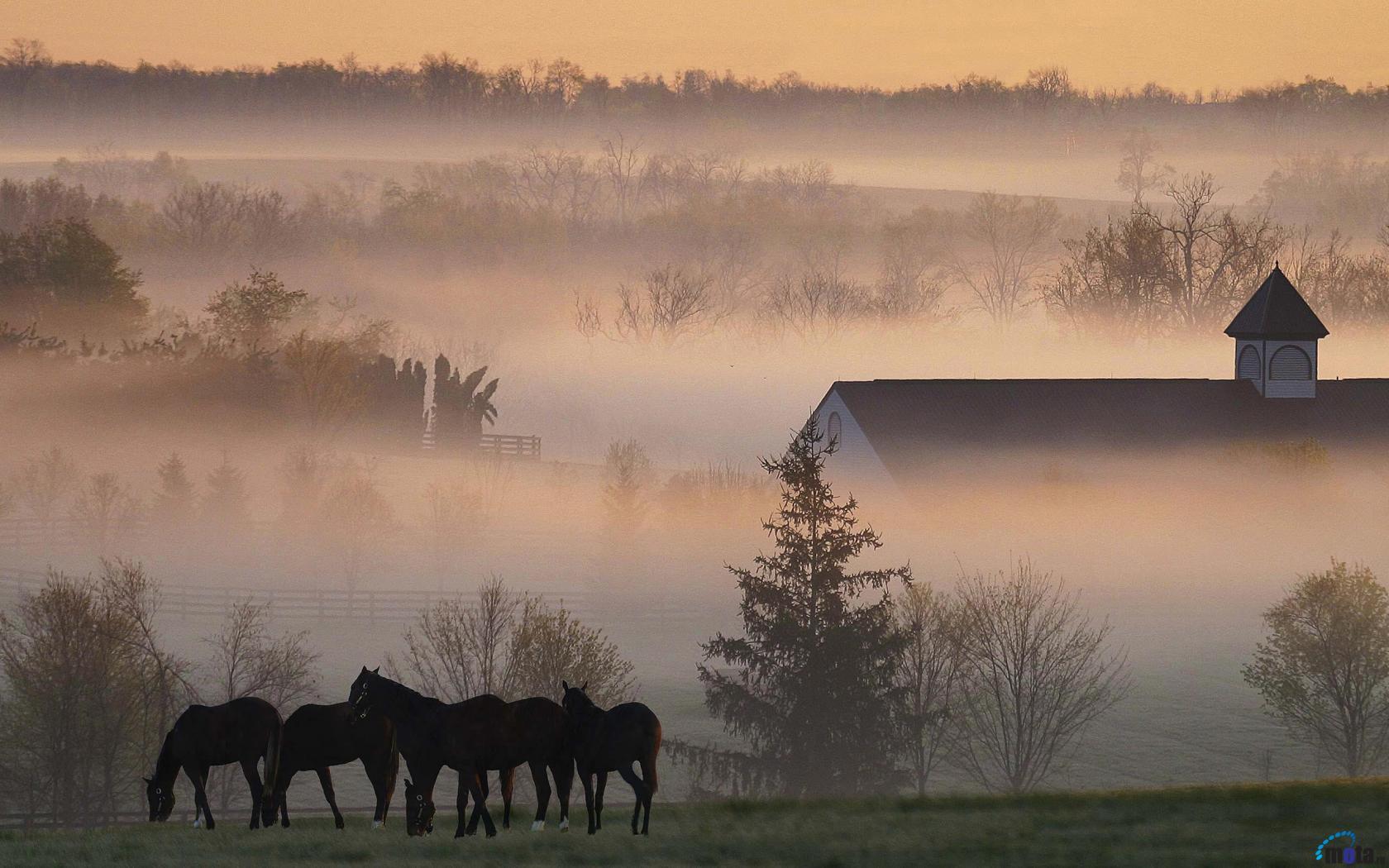 Download Wallpaper Early morning fog on a Kentucky horse farm 1680 x 1680x1050