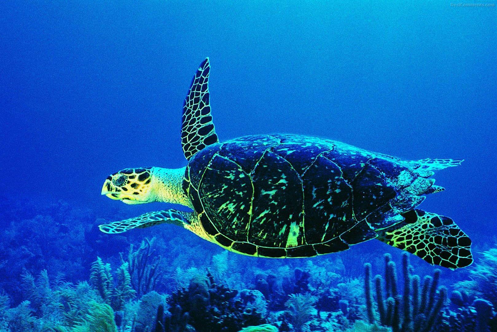 Life Underwater Wallpaper 51   DesiCommentscom 1618x1080