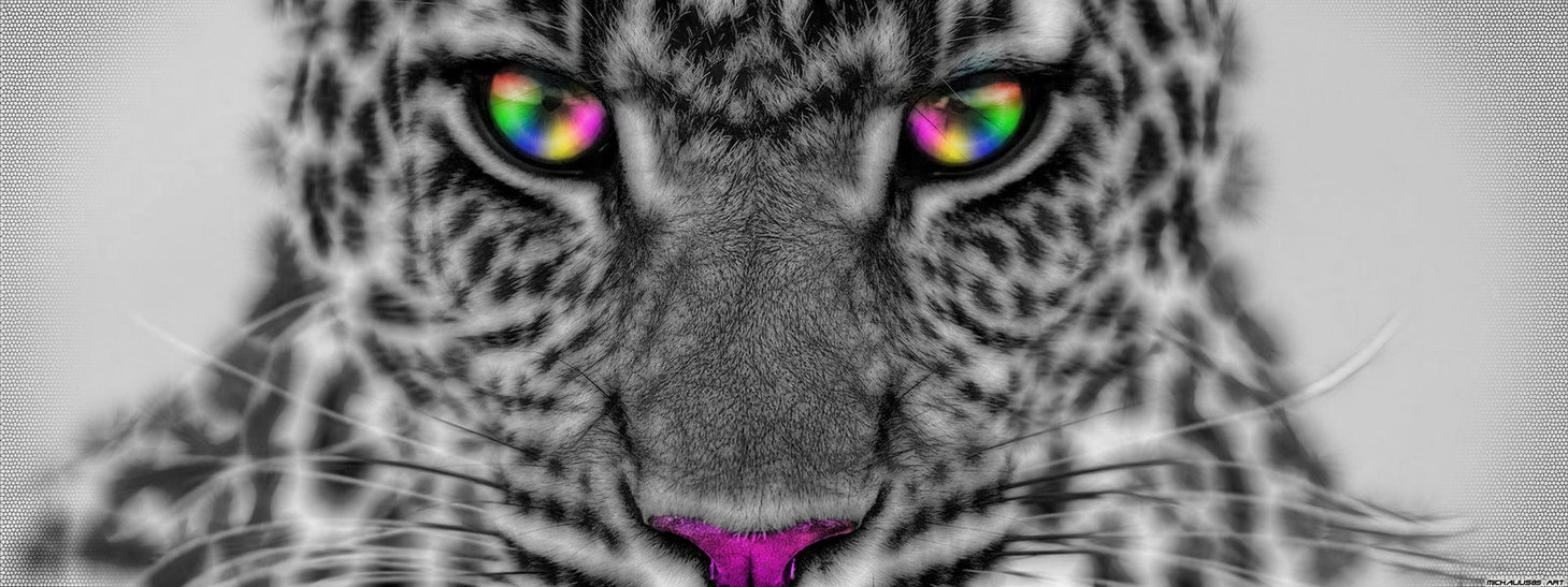 Colorful Cheetah Wallpaper Colorful 1459x547