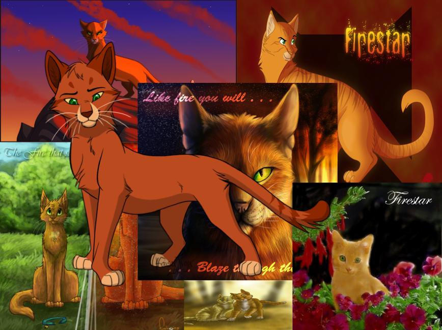 Warriors Cats Wallpaper Firestar Warrior cats firestar 868x649