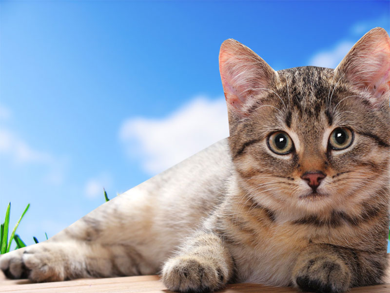 Free download Cat Desktop WallpapersComputer Wallpaper Wallpaper Downloads [ 800x600] for your Desktop, Mobile & Tablet | Explore 49+ Free Kitten  Wallpaper for Desktop | Desktop Wallpaper Cats and Kittens, Kitten  Wallpapers for