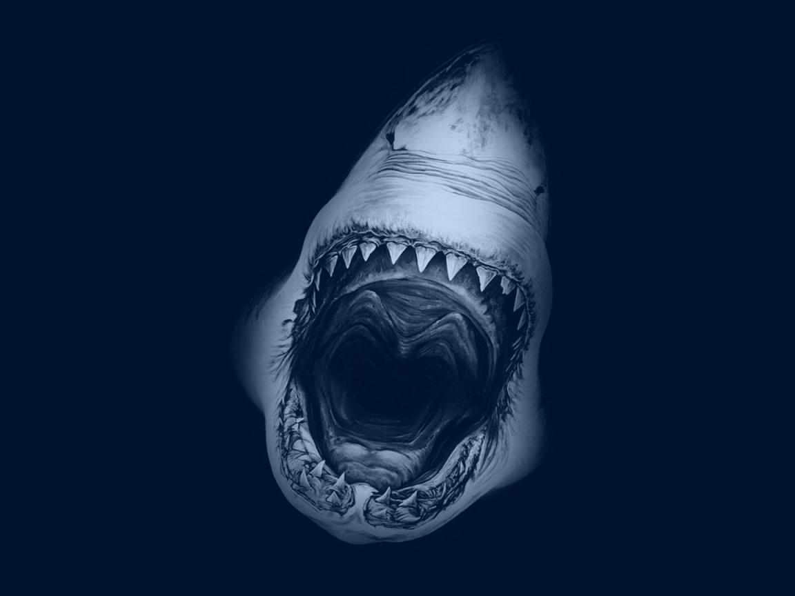 1152x864 Great White Shark desktop PC and Mac wallpaper 1152x864