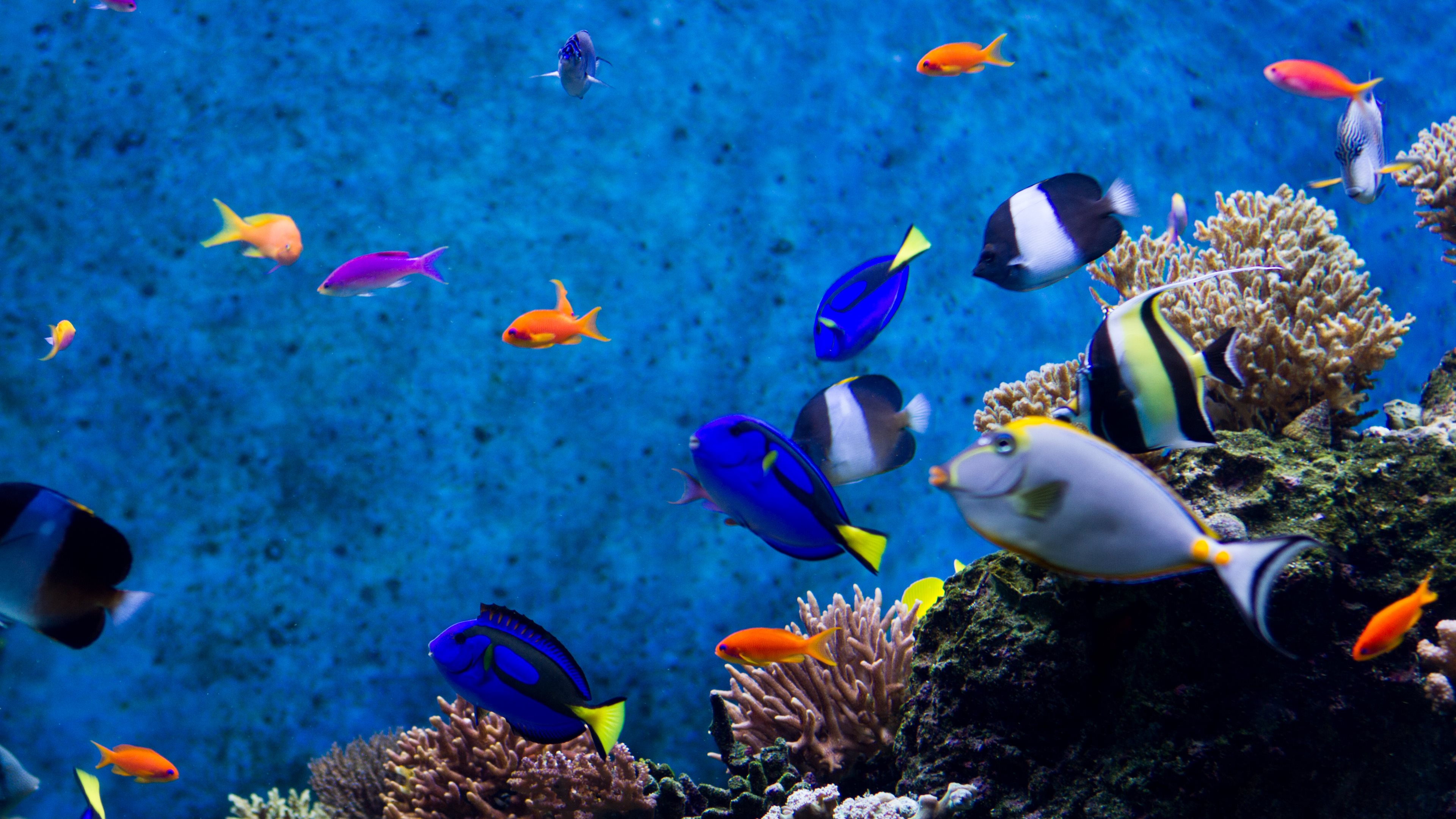 image about Fish Tank Background Printable referred to as printable fish tank backgrounds -