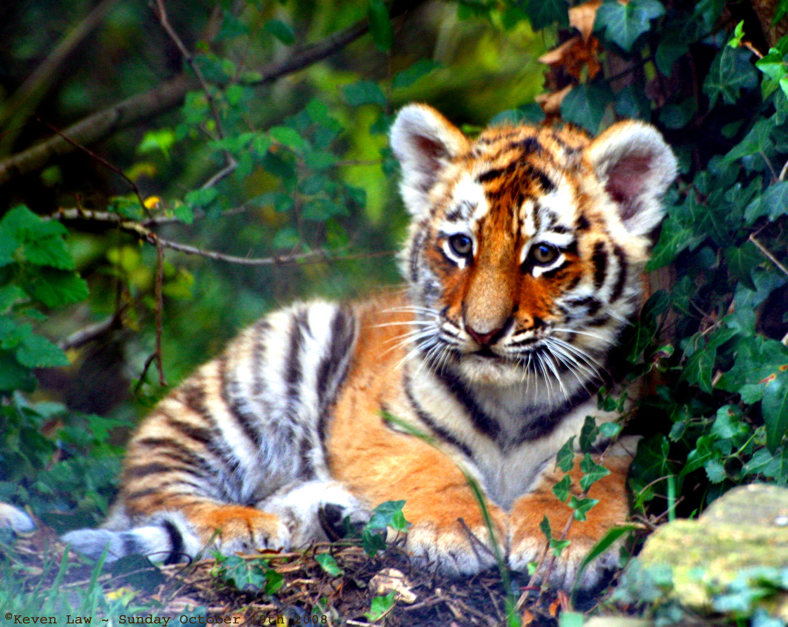 Cub desktop wallpaper High Quality WallpapersWallpaper Desktop 2700x2148