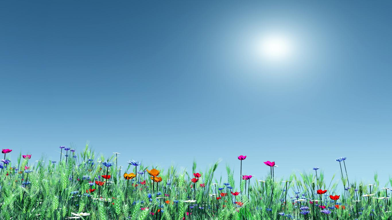 Summer Flowers HD Wallpaper For Desktop 1366x768