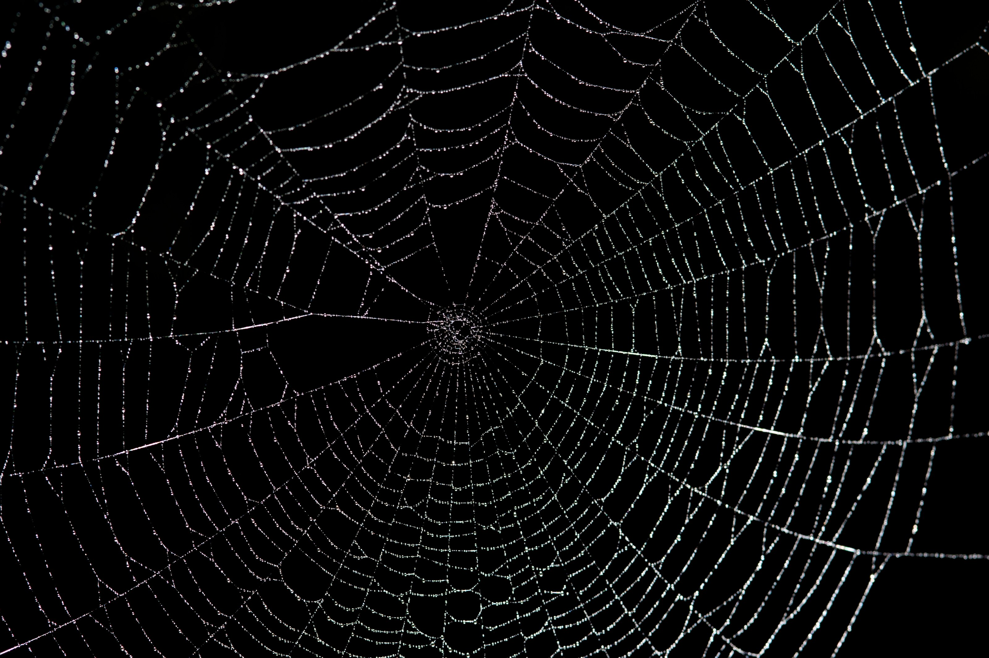 0637 001 JPG Spiders Web Wallpapers and Spiders Web Backgrounds 1 of 1 3200x2129