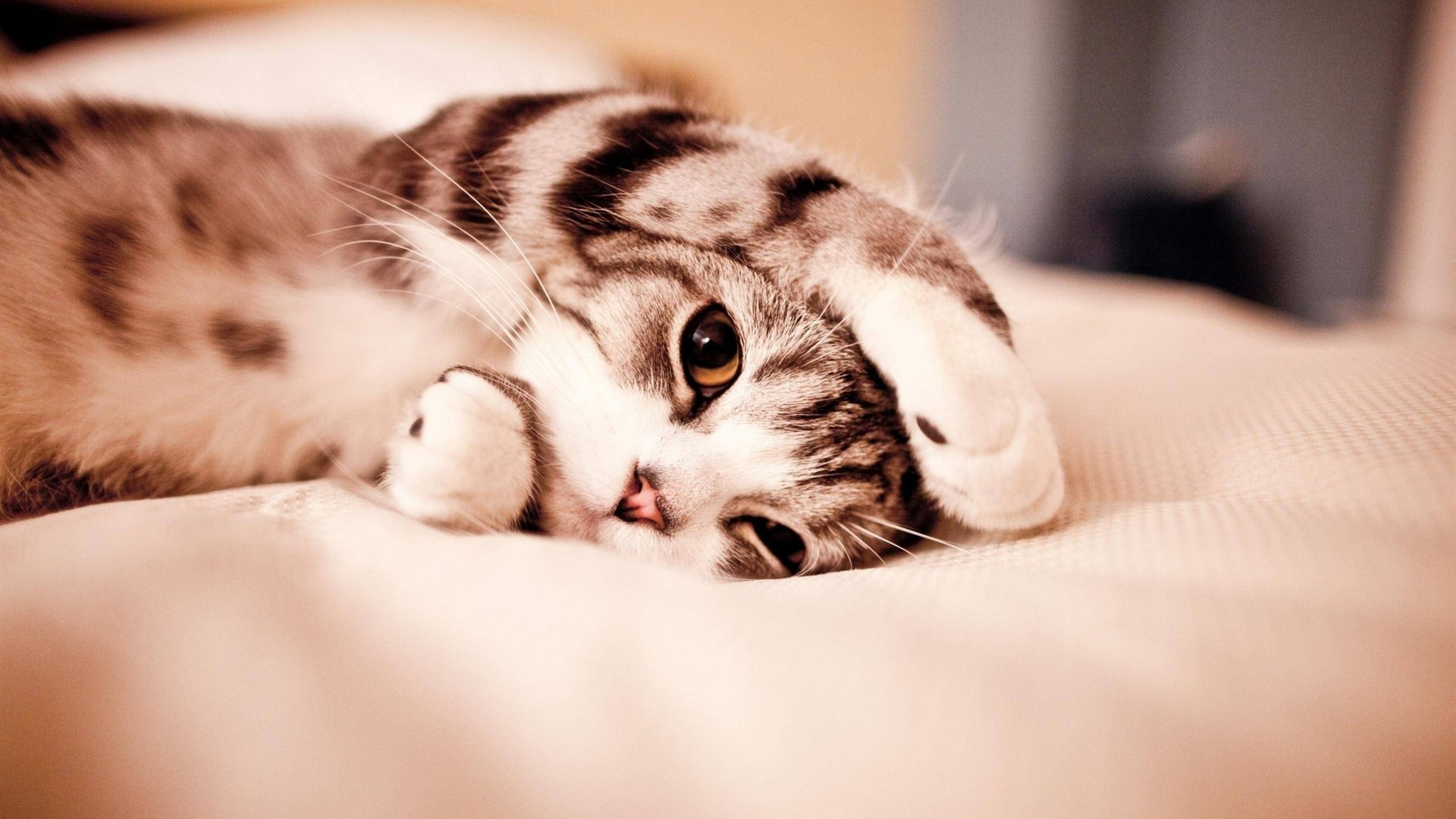 Cute Cat Wallpaper HD 2021 Cute Wallpapers 1920x1080
