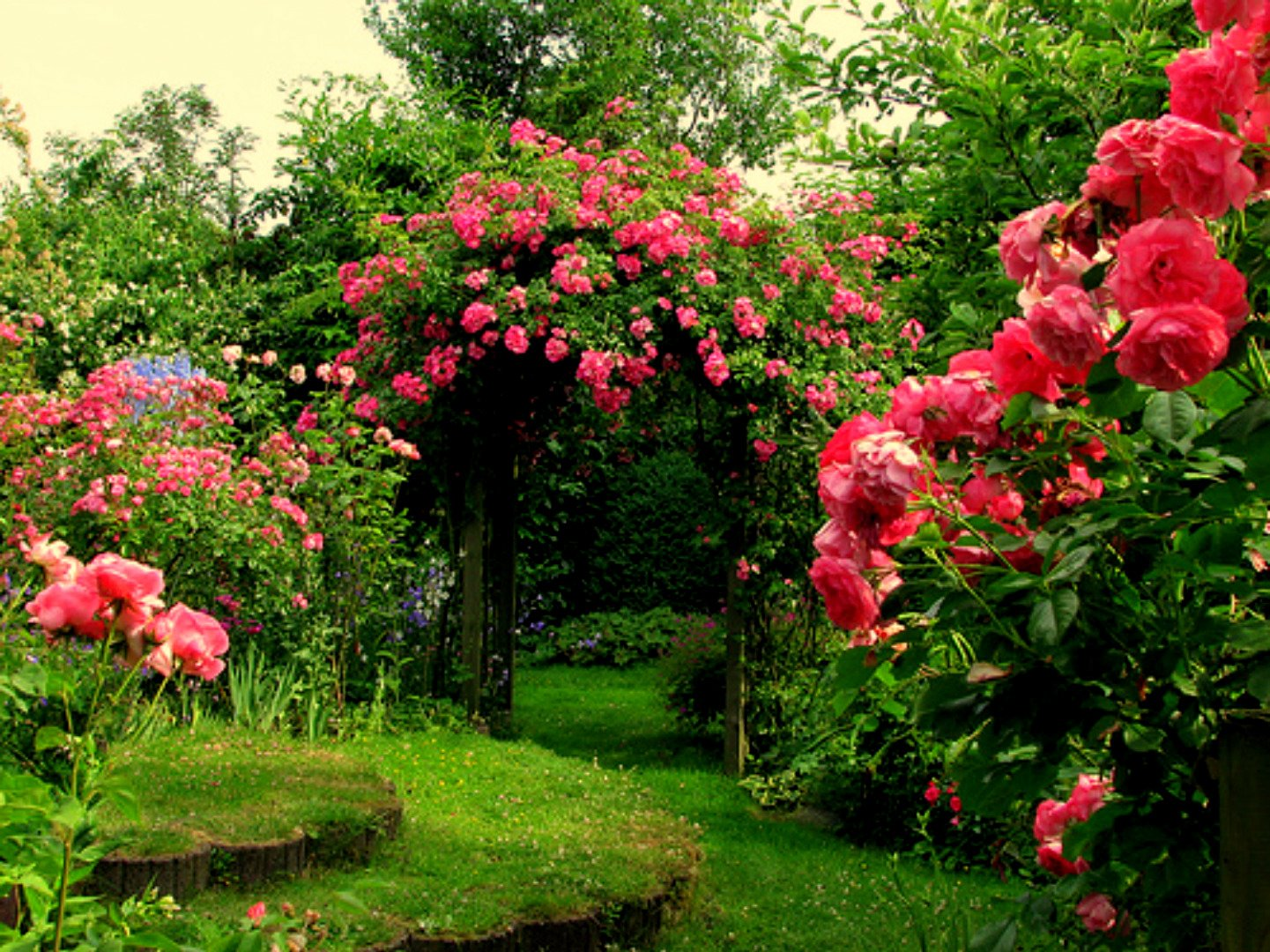 42 Rose Garden Wallpaper Desktops On Wallpapersafari