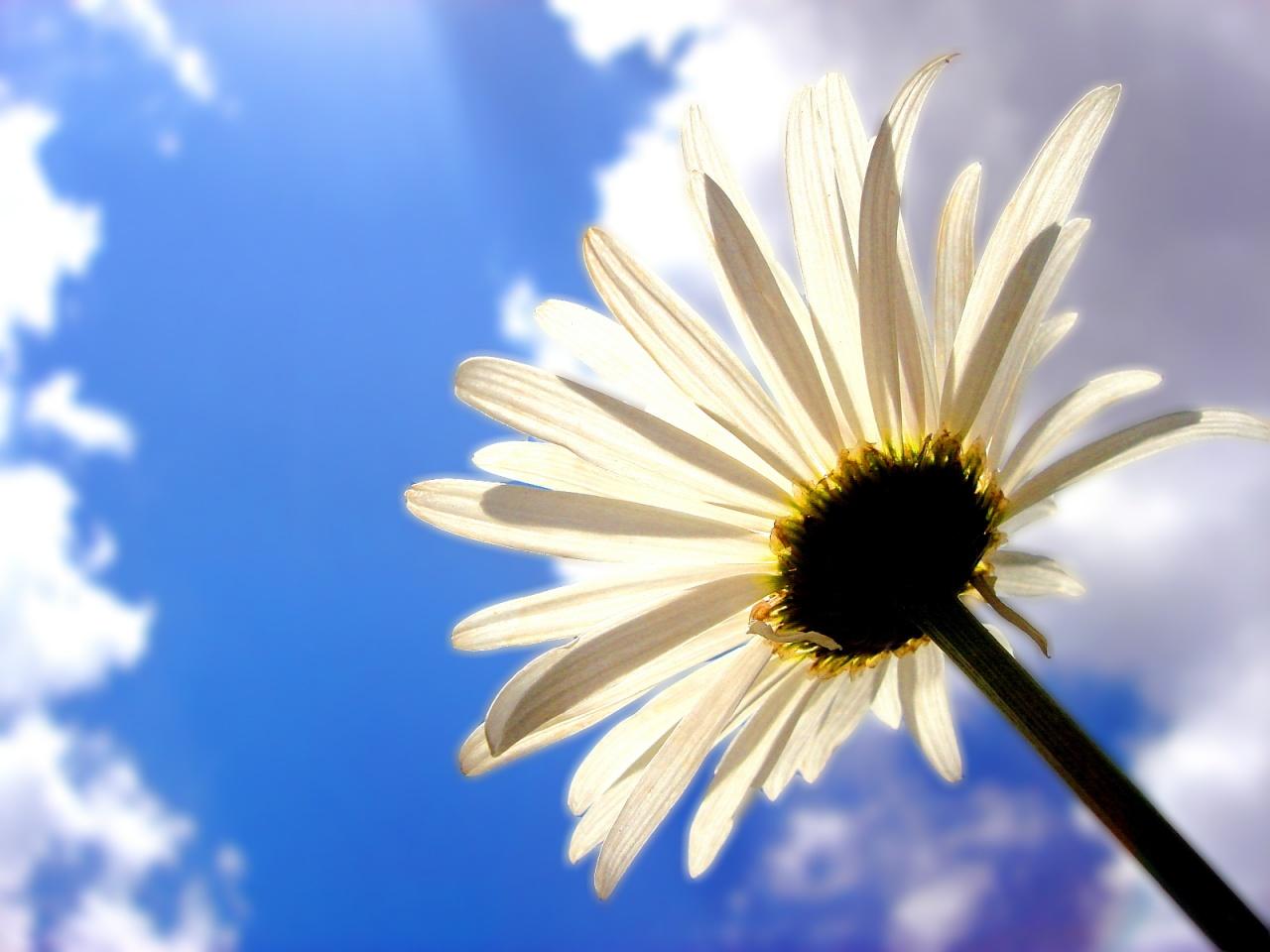 Цветок на фоне облаков