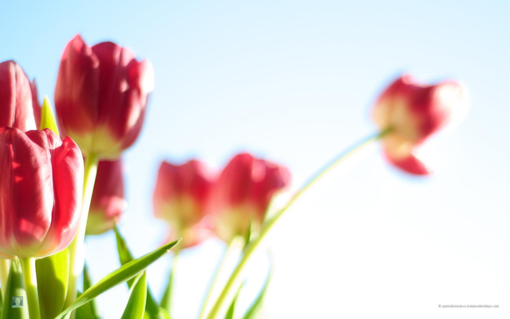 spring flower wallpaper pink - photo #23