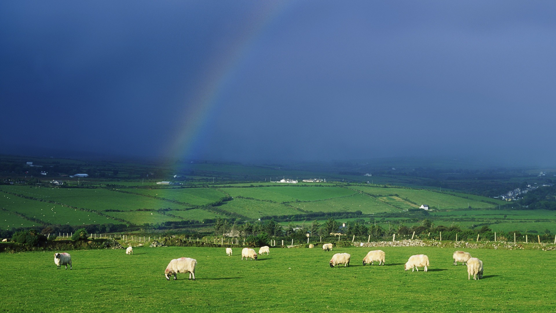 Sheep Ireland Wallpaper 1920x1080 Sheep Ireland Rainbows 1920x1080