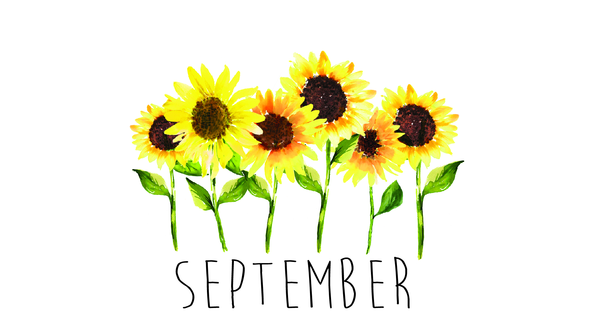 Sunflowers Freebie September 2018 Tech Wallpaper Design Works Intl 1920x1080