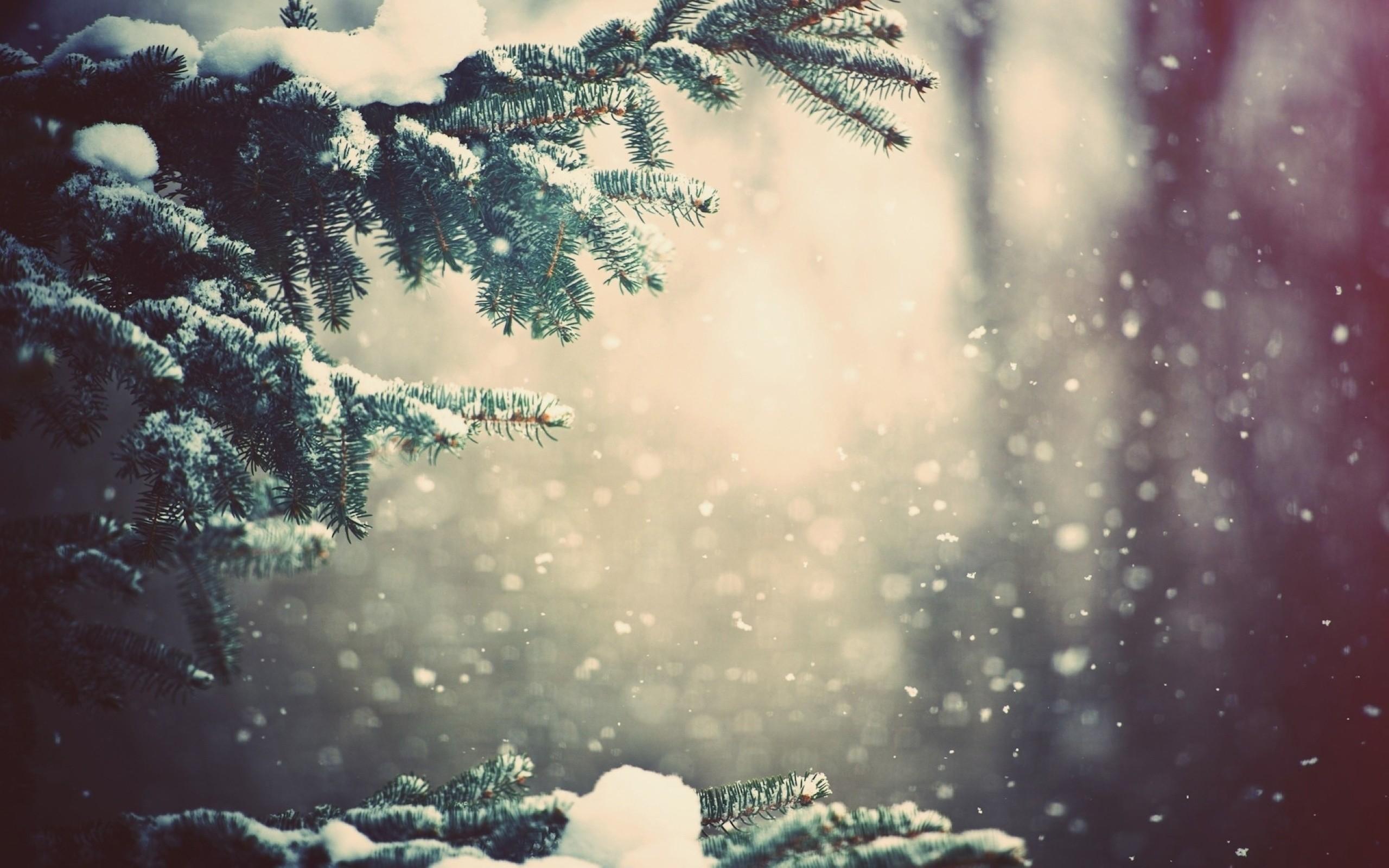 Snow on Christmas Tree Branches   Nexus Wallpaper 2560x1600