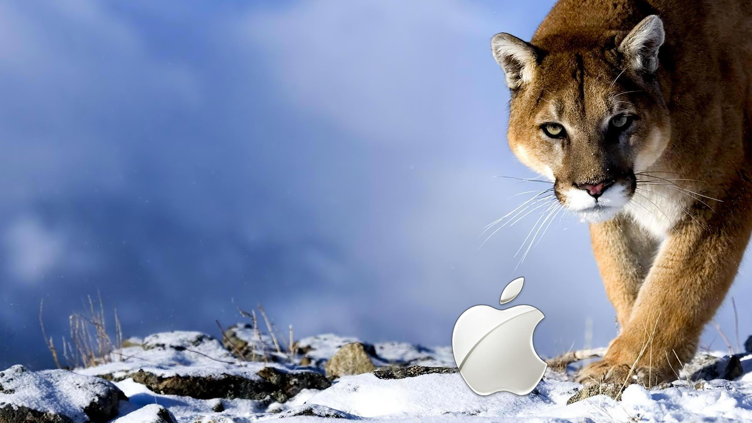 51 HD Mac Wallpapers For Download 2560x1440