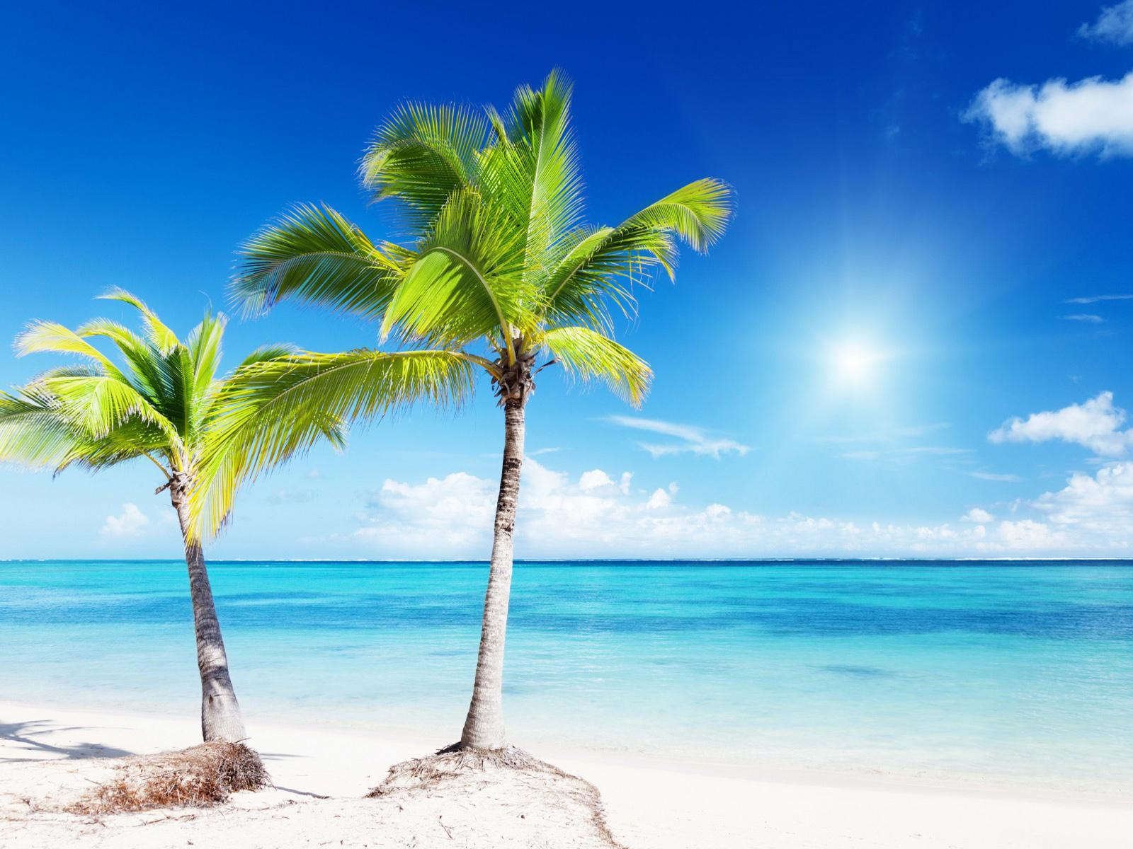 Backgrounds for Gt Tropical Beaches with Palm Trees Wallpapers 1600x1200