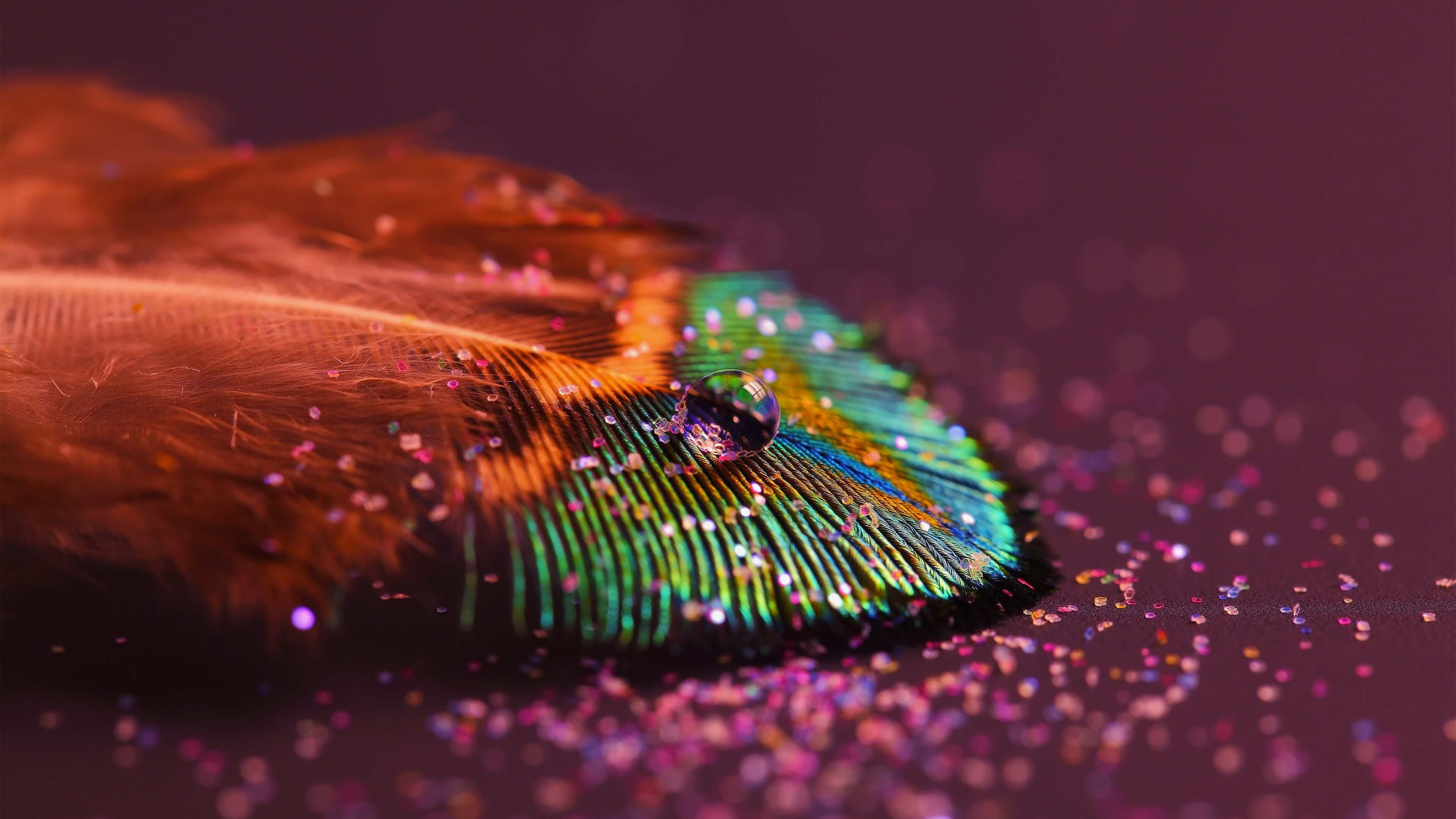 Colorful Feather HD wallpaper for 4K 3840 x 2160   HDwallpapersnet 3840x2160