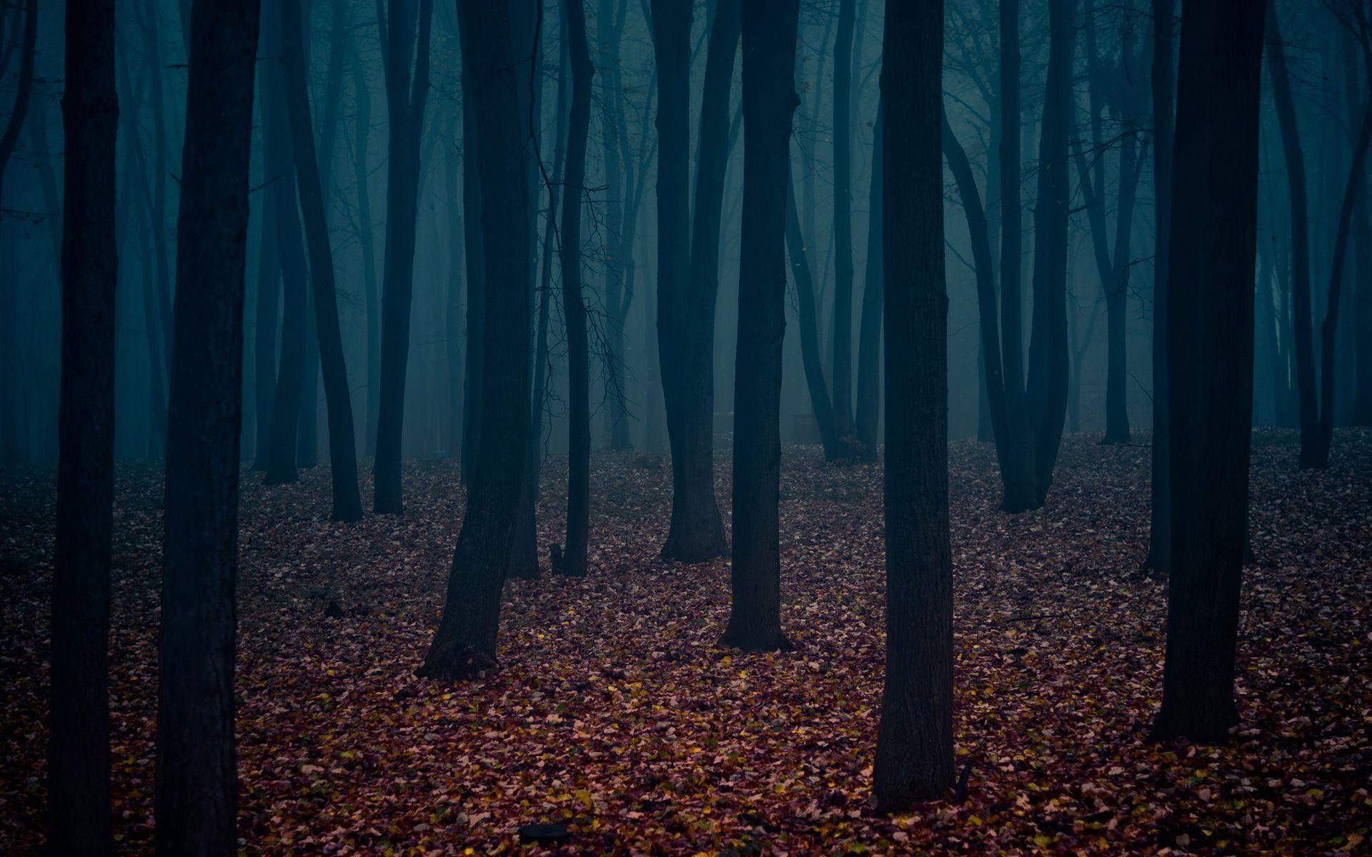 Dark Forest Wallpapers 1920x1200