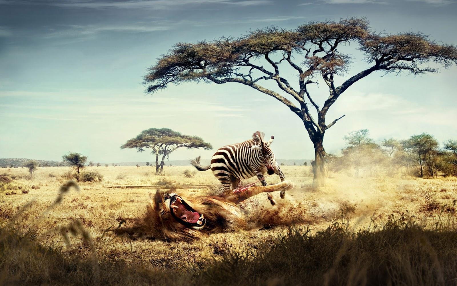<b>Animals</b> 1920x1080 Full <b>HD Wallpapers</b> - 1080p <b>Wallpapers</b>   <b>Animals</b> ...