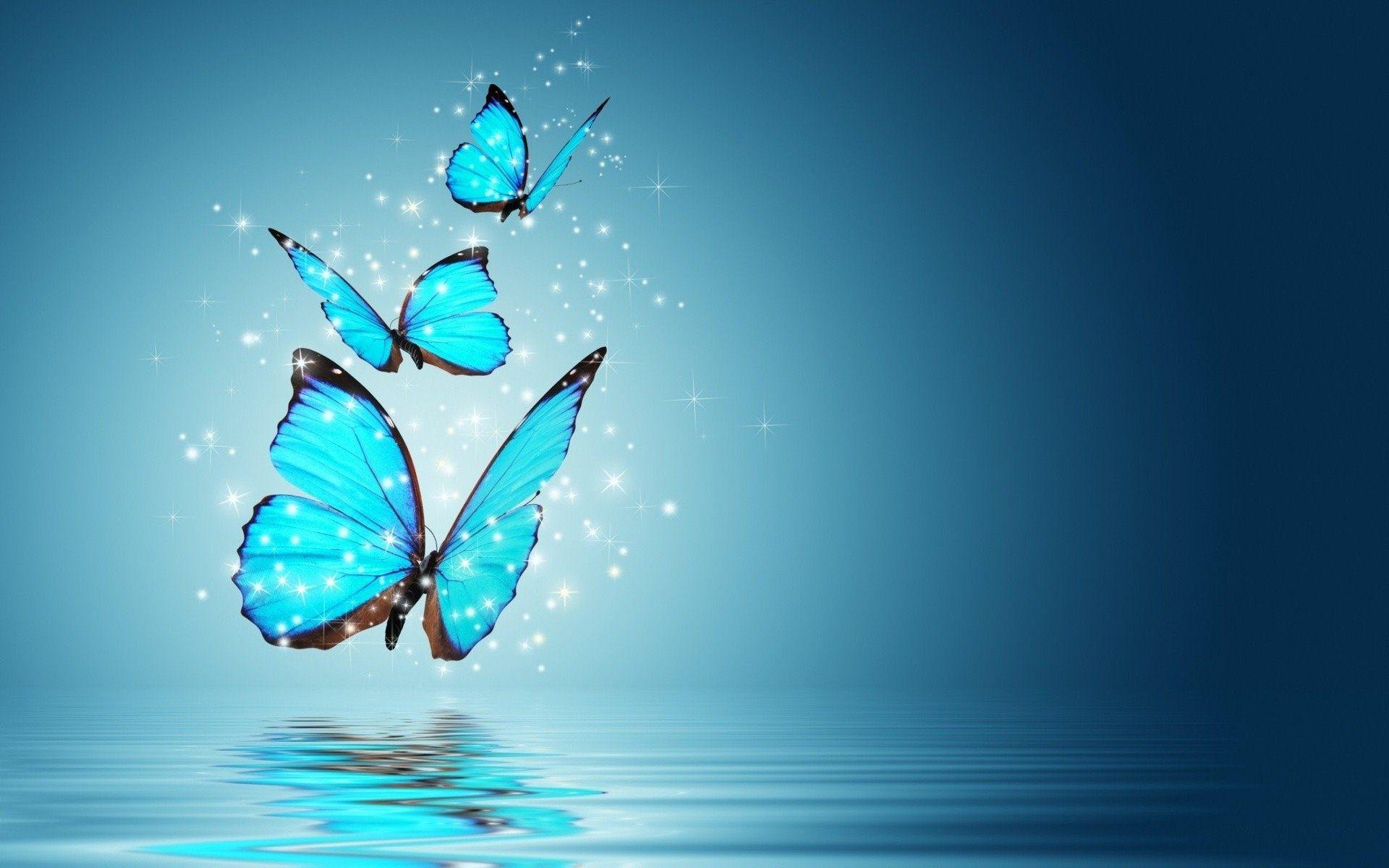 Blue Butterfly Wallpaper HD 1920x1200