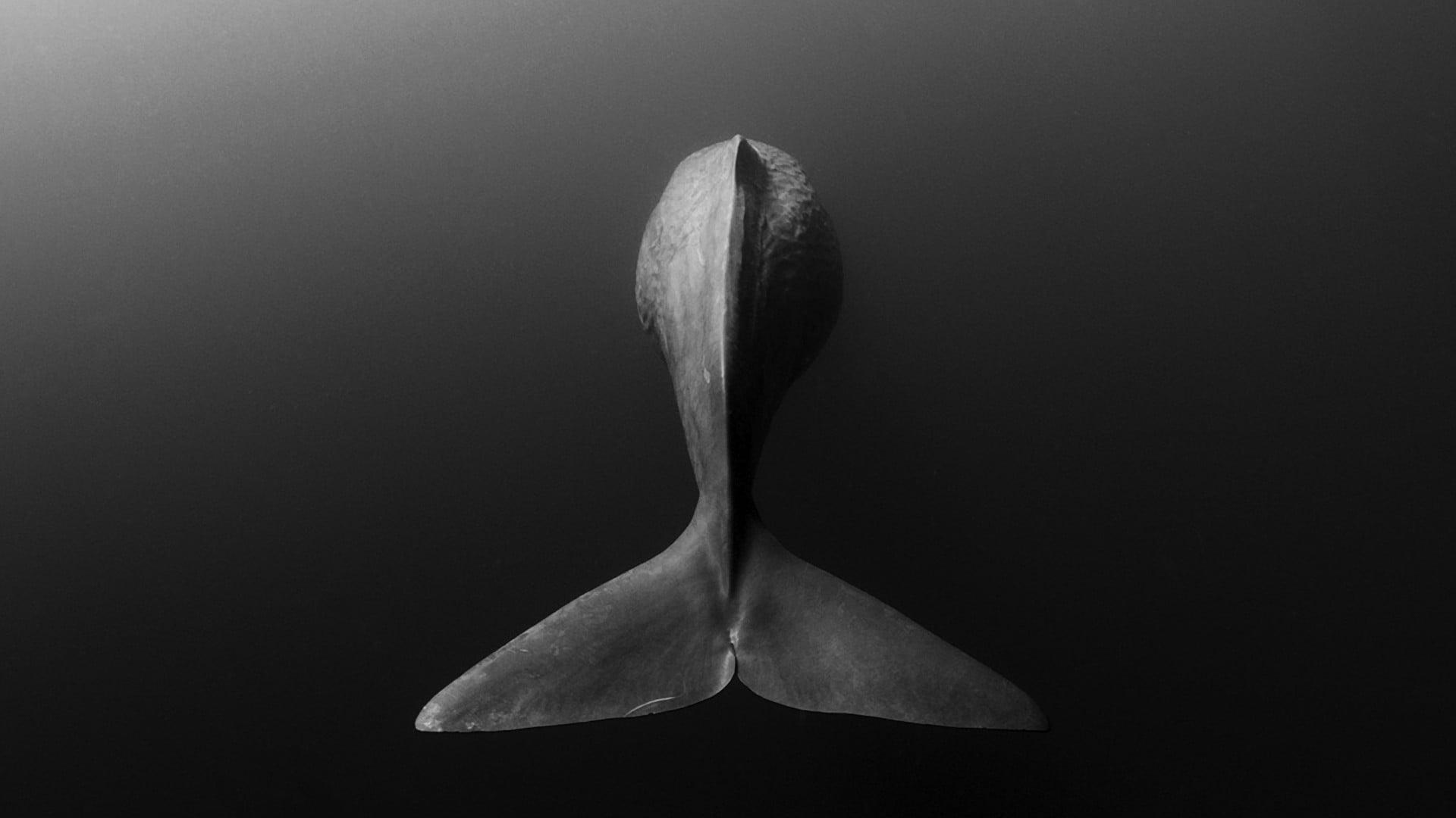 Black fish tail decor animals whale monochrome HD wallpaper 1920x1080