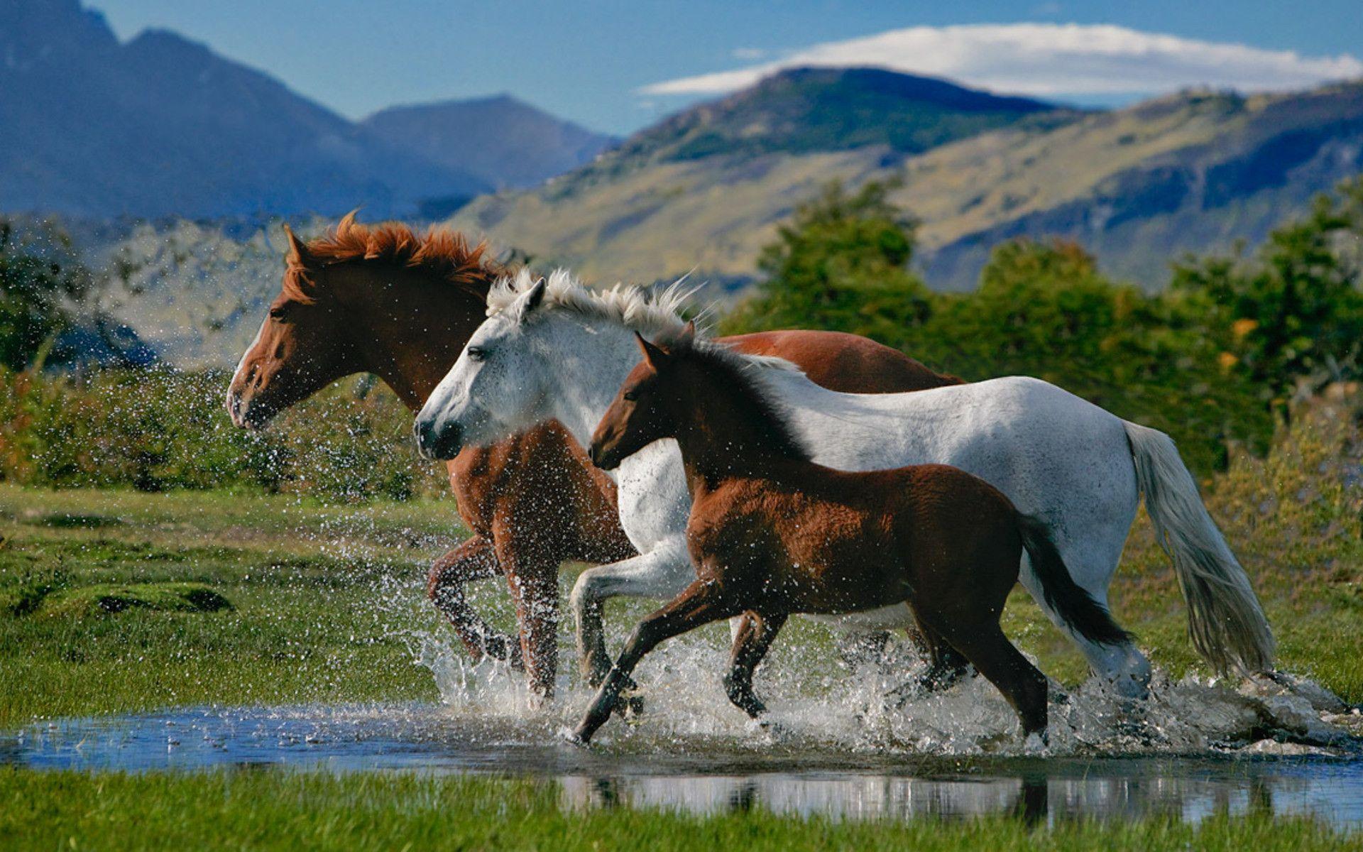 Beautiful Horses Wallpapers 1920x1200