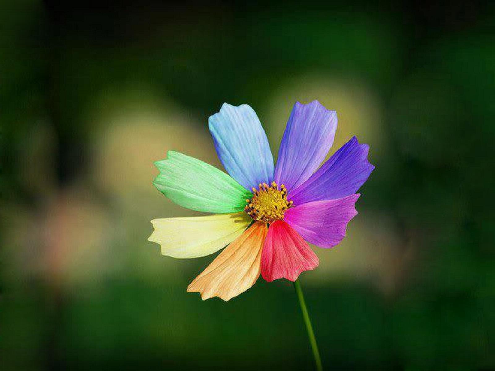 Цветы картинки на аву