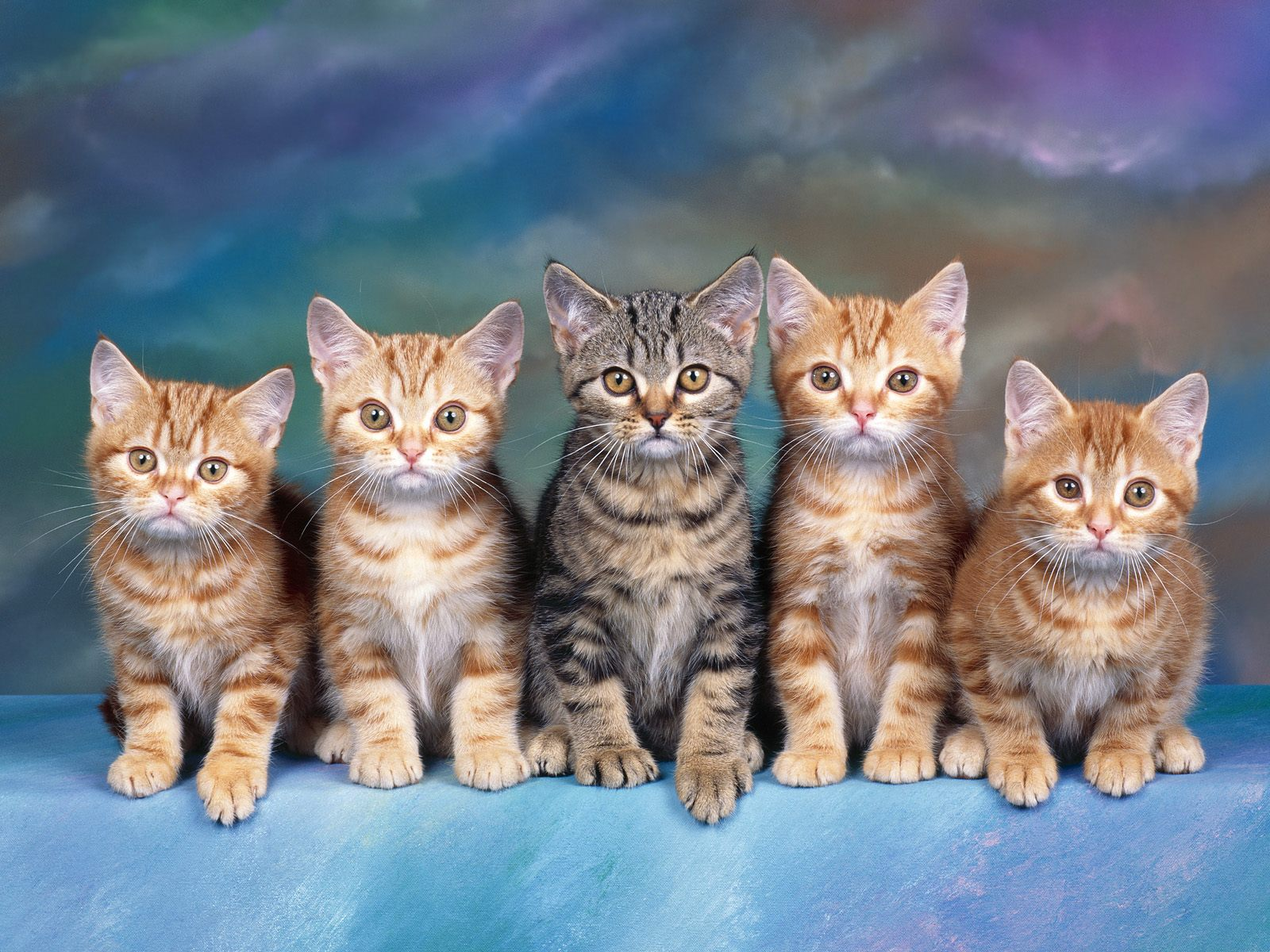 Tabby Kittens   Animals Wallpaper Image with Cats 1600x1200