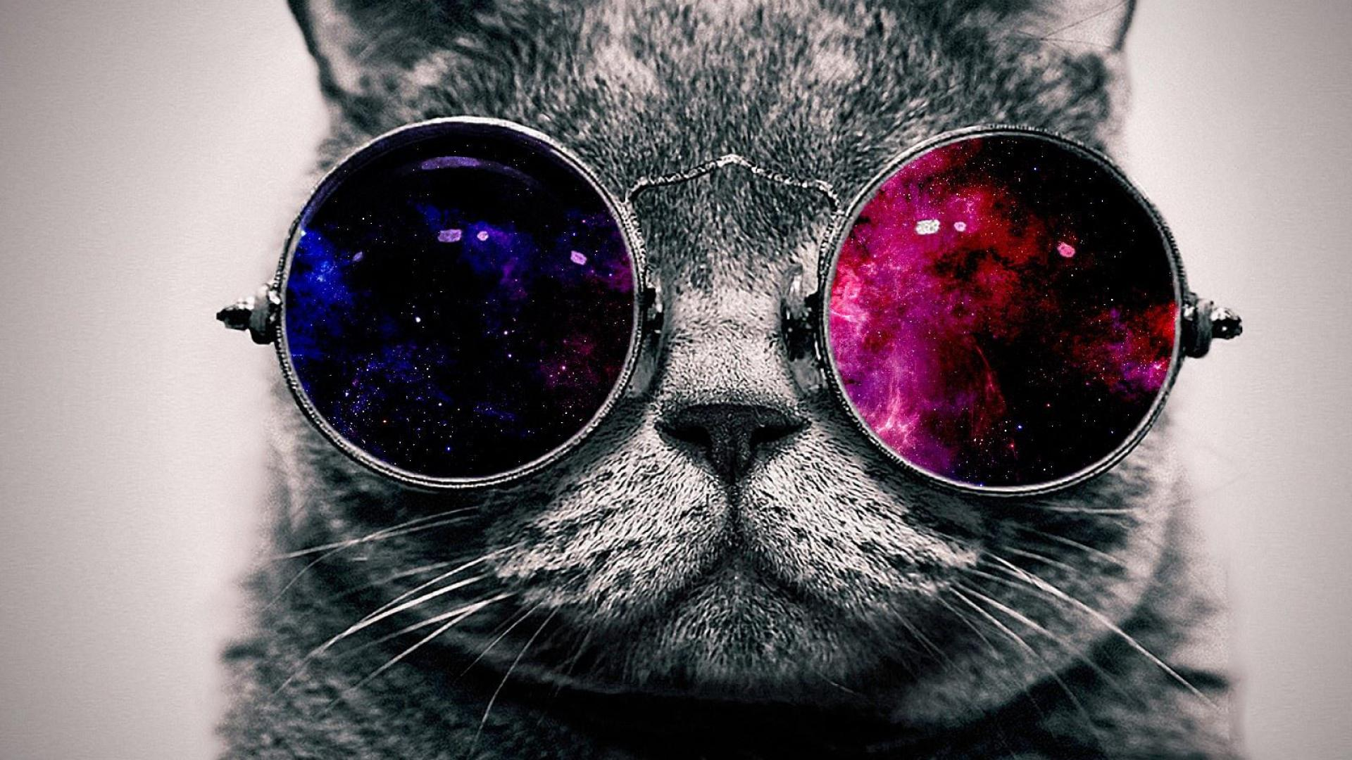 COOL CAT WITH THE GLASSES WALLPAPER   148014   HD Wallpapers 1920x1080