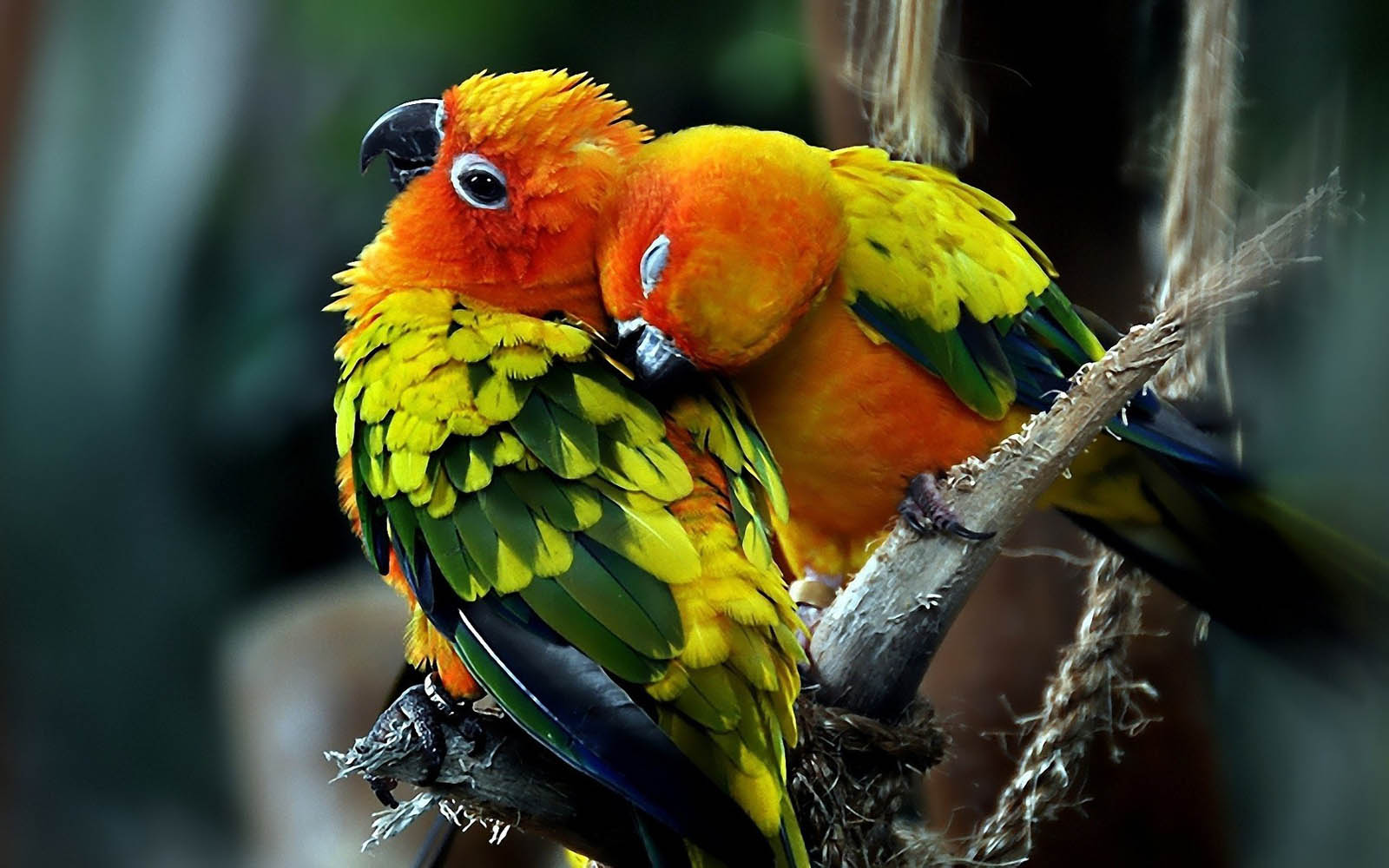 Love Birds Wallpapers Love Birds DesktopWallpapers Love Birds 1600x1000