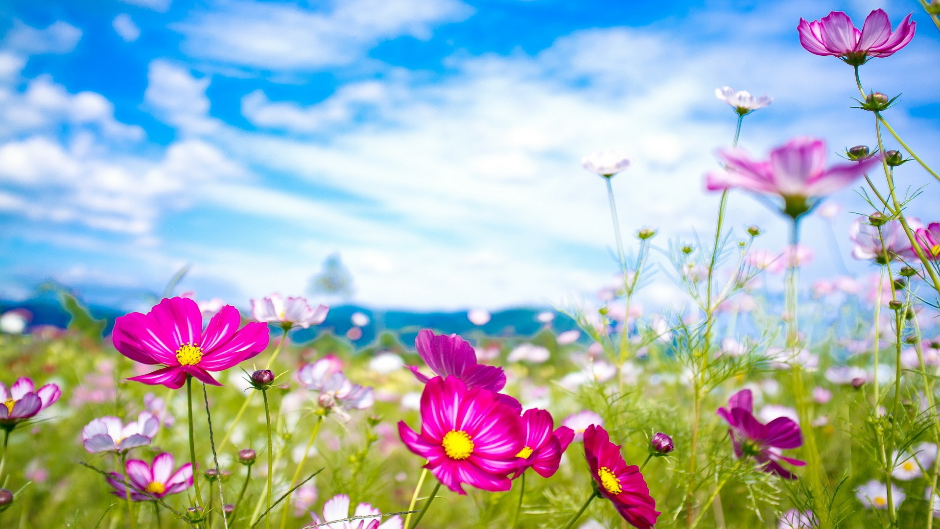 Summer Wallpaper   Wallpaper High Definition High Quality 1920x1080