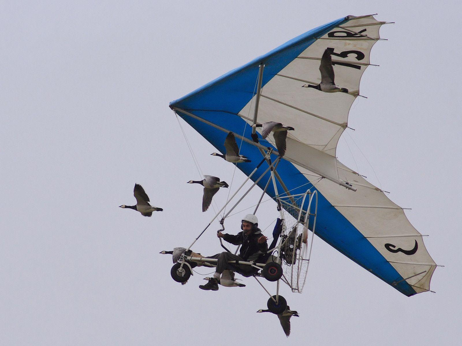 desktop wallpaper birds blue 176164 1600x1200
