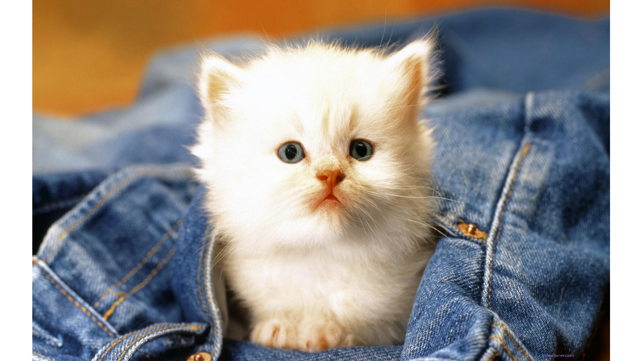 of cute cat baby beauty cute cat baby hd wallpaper wallpaper 2048x1152