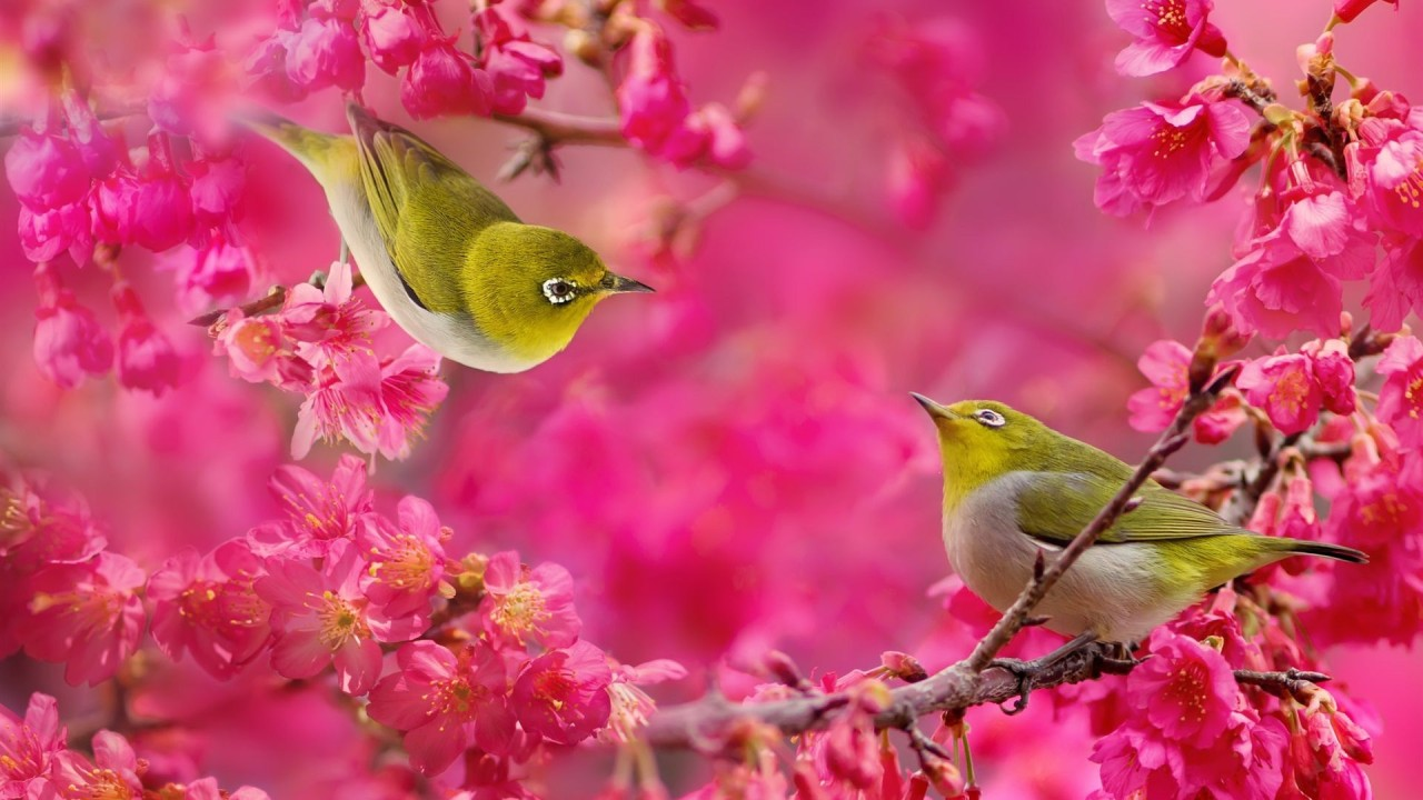 Birds and Flowers Wallpaper 1280x720
