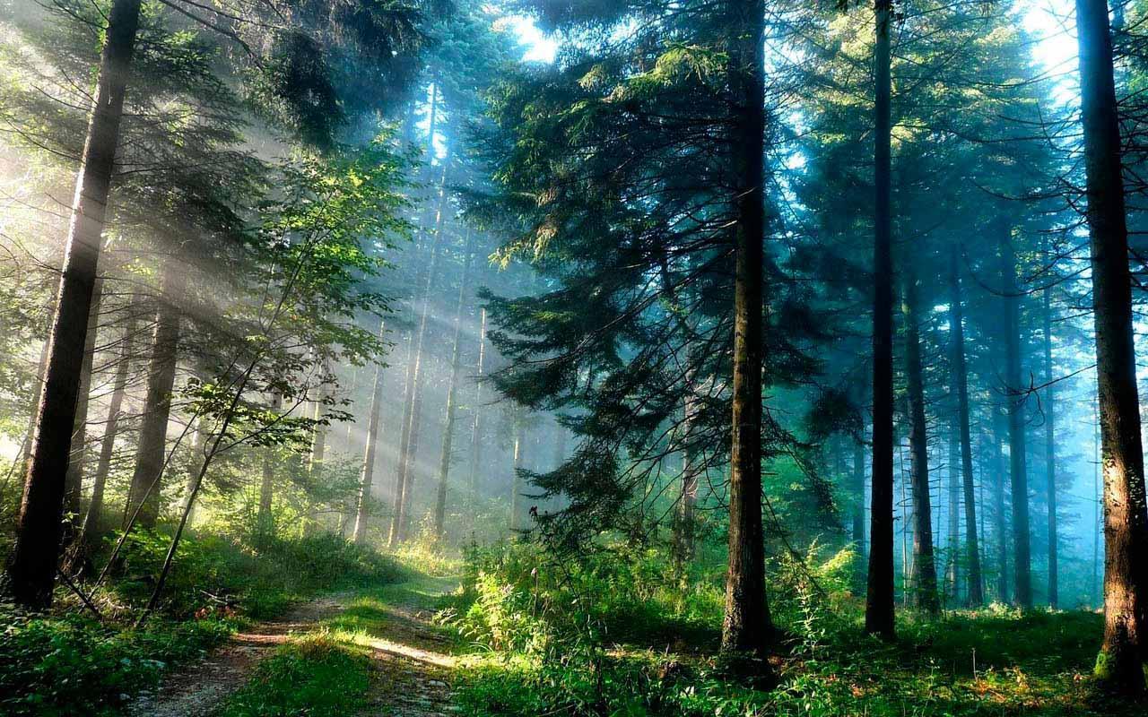 Galaxy S4 Forest Wallpaper HD   screenshot 1280x800