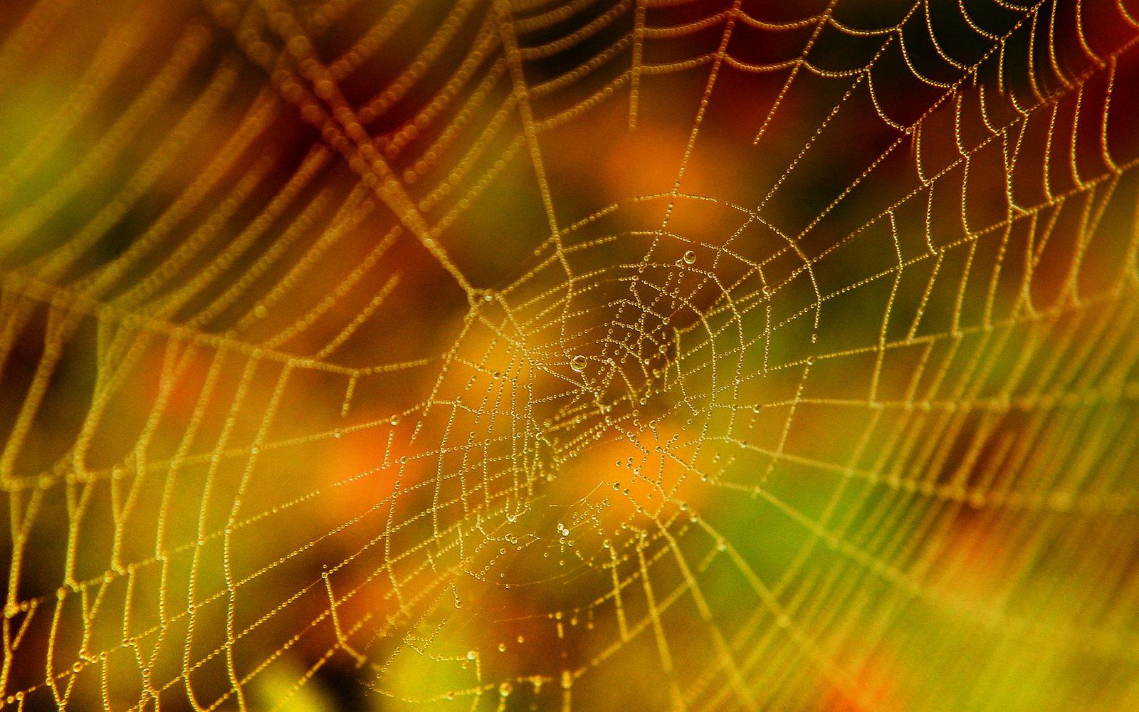 Halloween Spider Web by Casperium 1600x1000