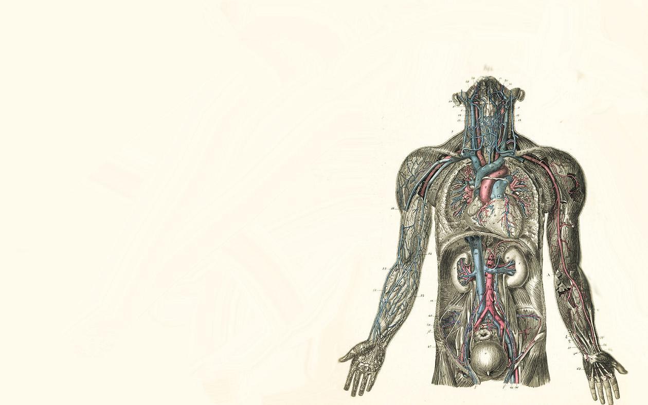 anatomy wallpaper background - photo #17