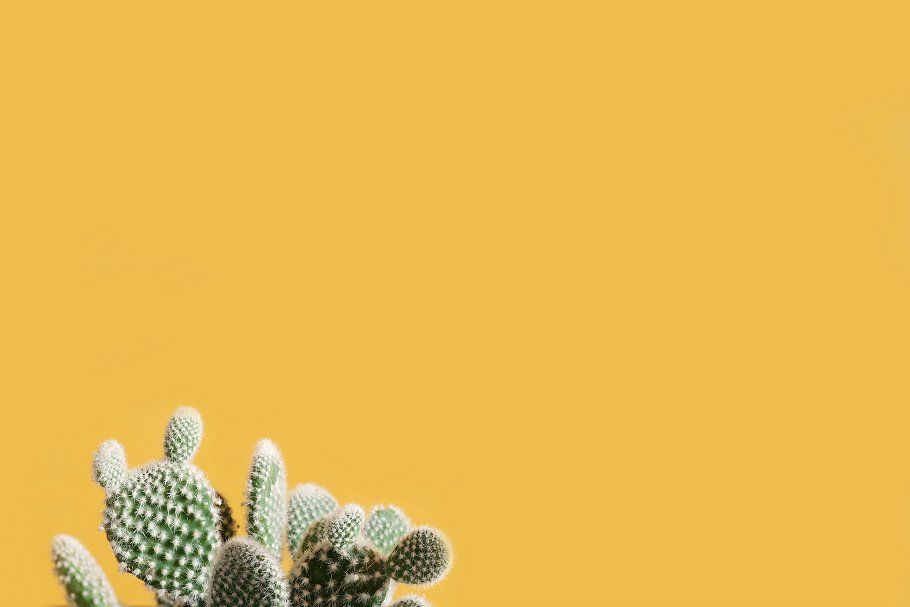 Cactus against yellow background by Scott Webb on creativemarket 910x607