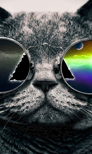 Cool cat wallpapers wallpapersafari - Cool backgrounds of cats ...