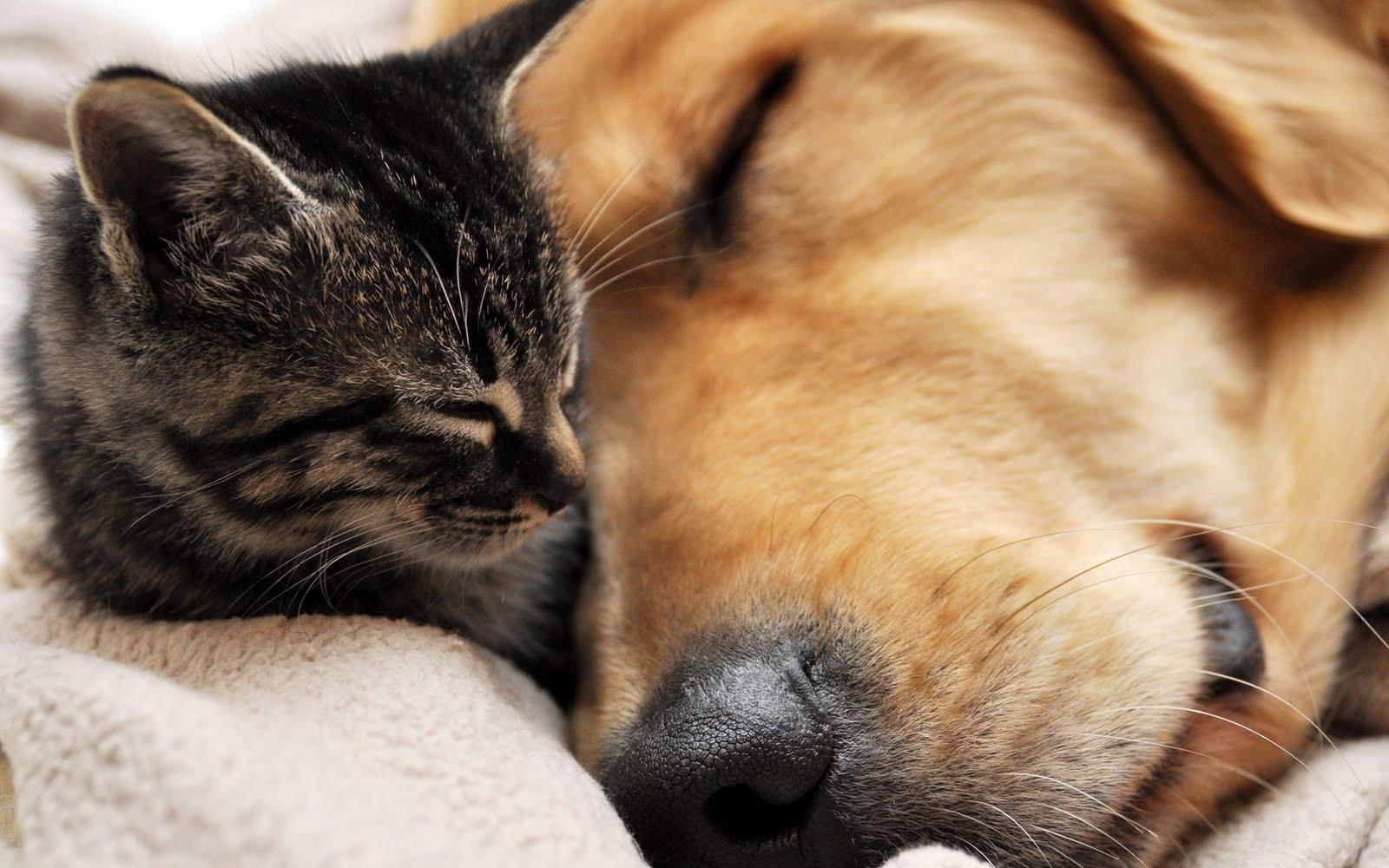 Similar Cute cat and dog wallpaper dowload 1600x1000