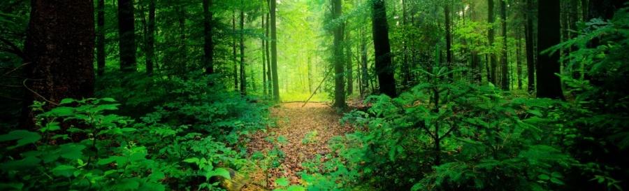 Forest Road   Linkedin Backgrounds 900x273