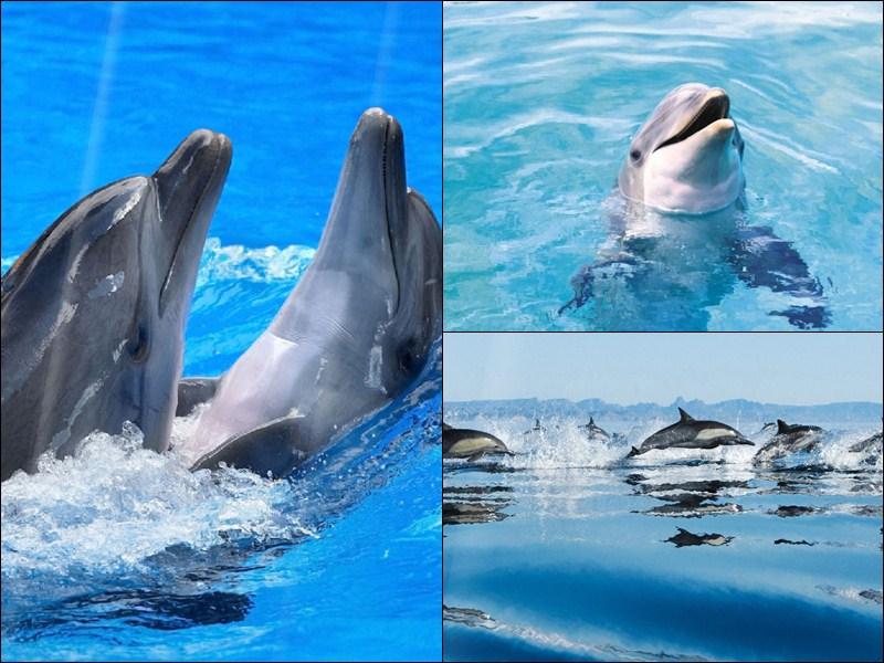 Happy Dolphins Animated Wallpaper   DesktopAnimatedcom 800x600