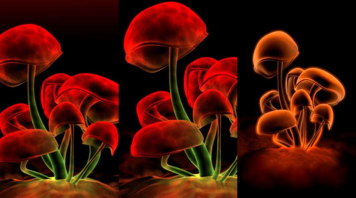Neon Mushroom Wallpaper